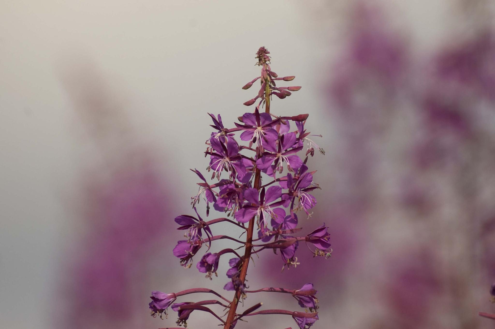 Wild flowers by leslie.mcbeath