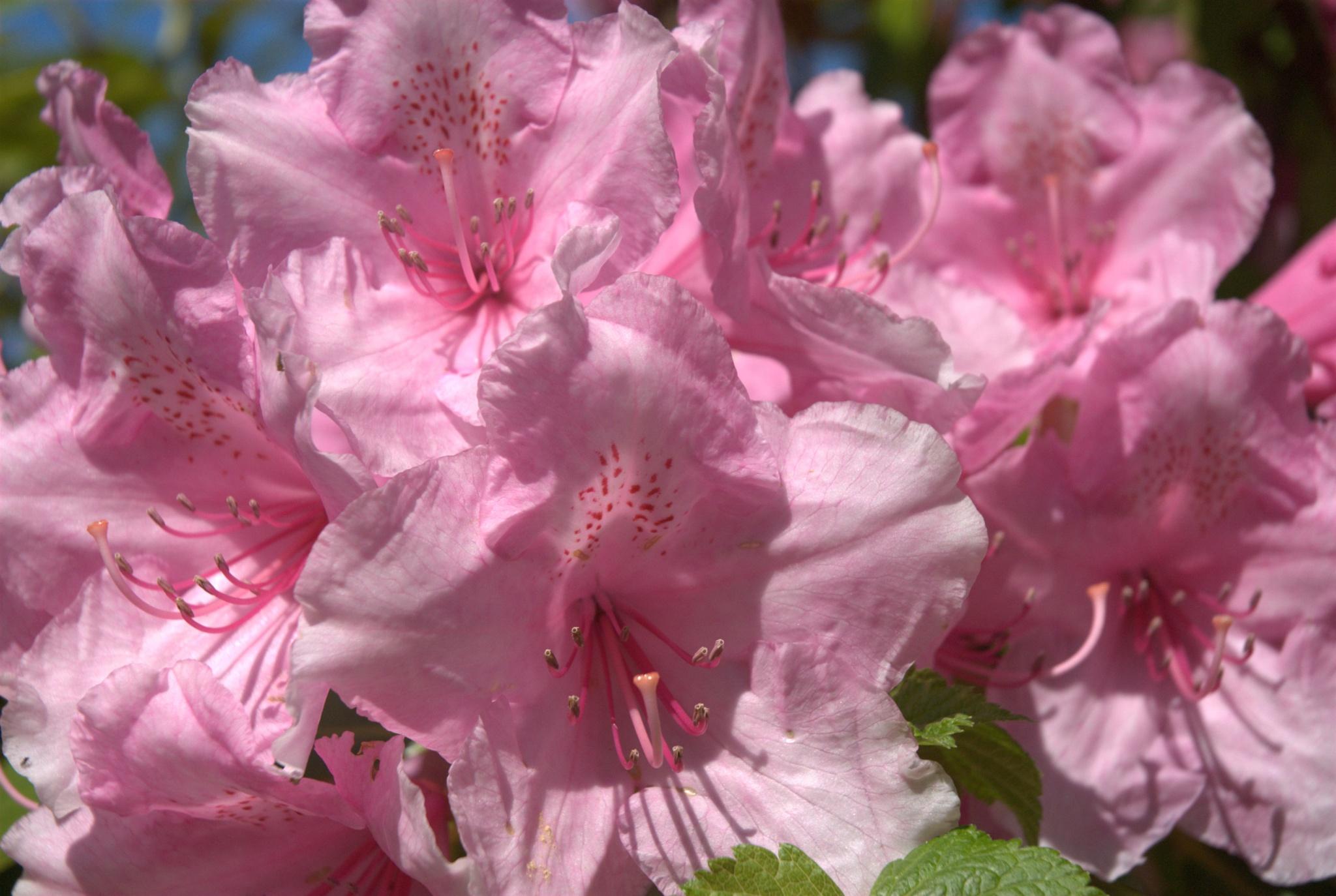 Summer flowers by leslie.mcbeath