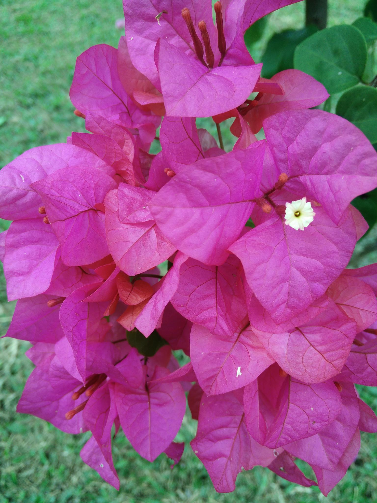 bunga kertas pink by hairul Nezam