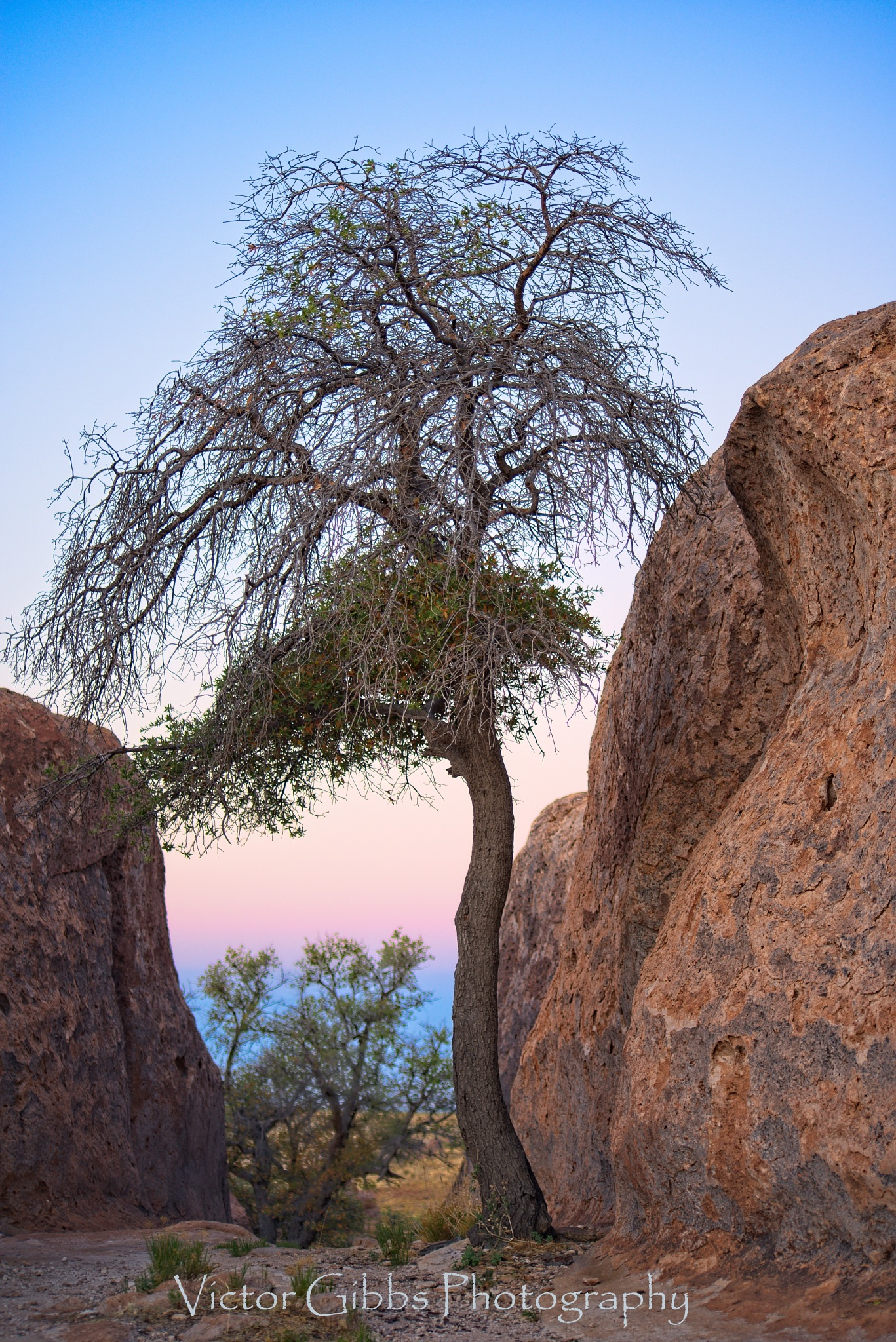 Trees and Rocks by food4thoth