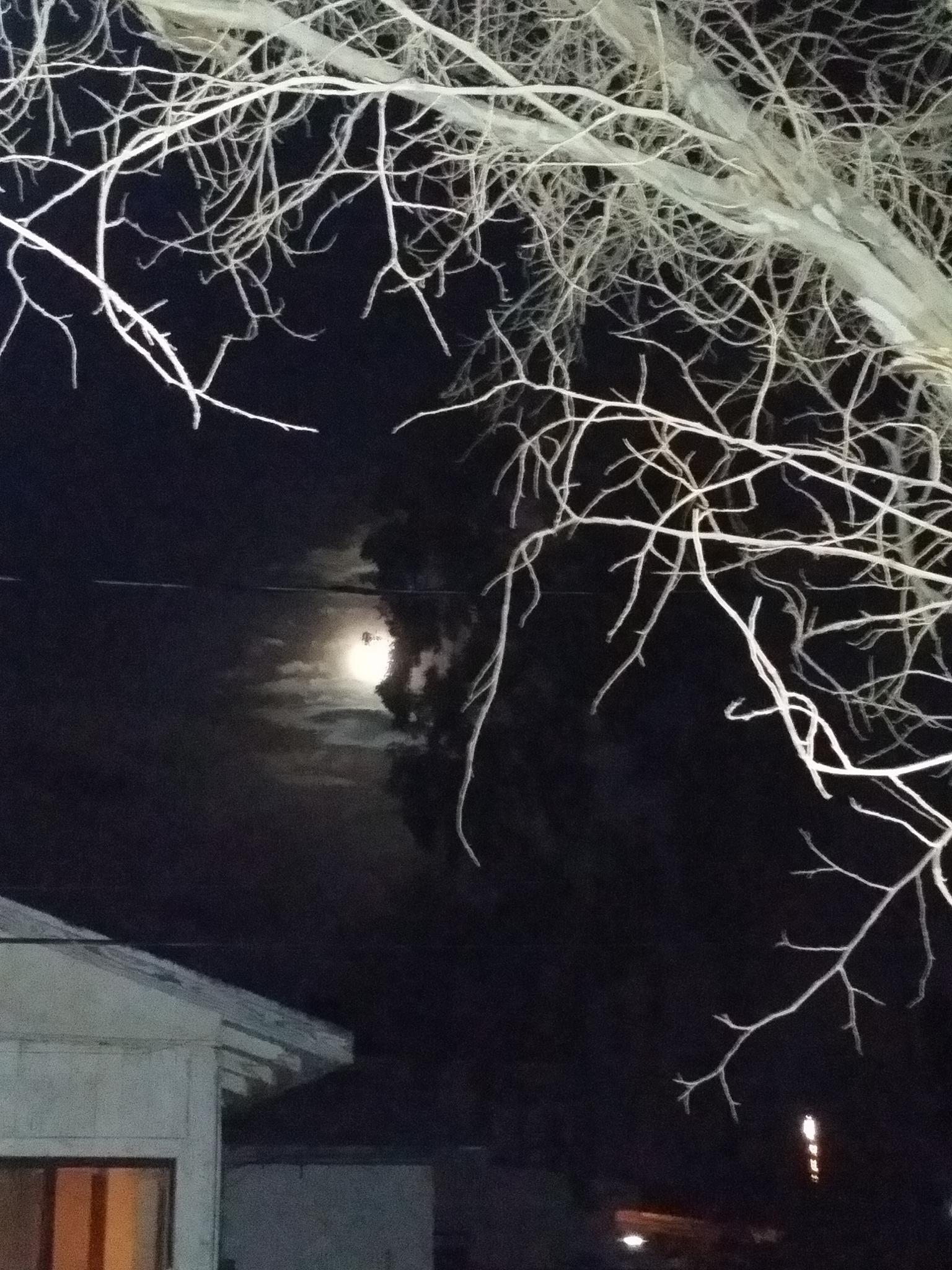 wicked  moon  by pattie.mcwhorter