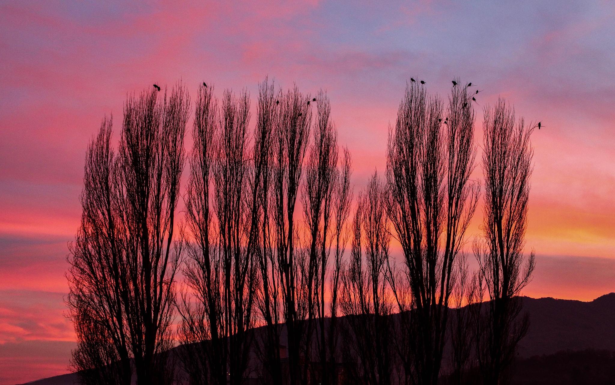 Sherbet sky by Tanja