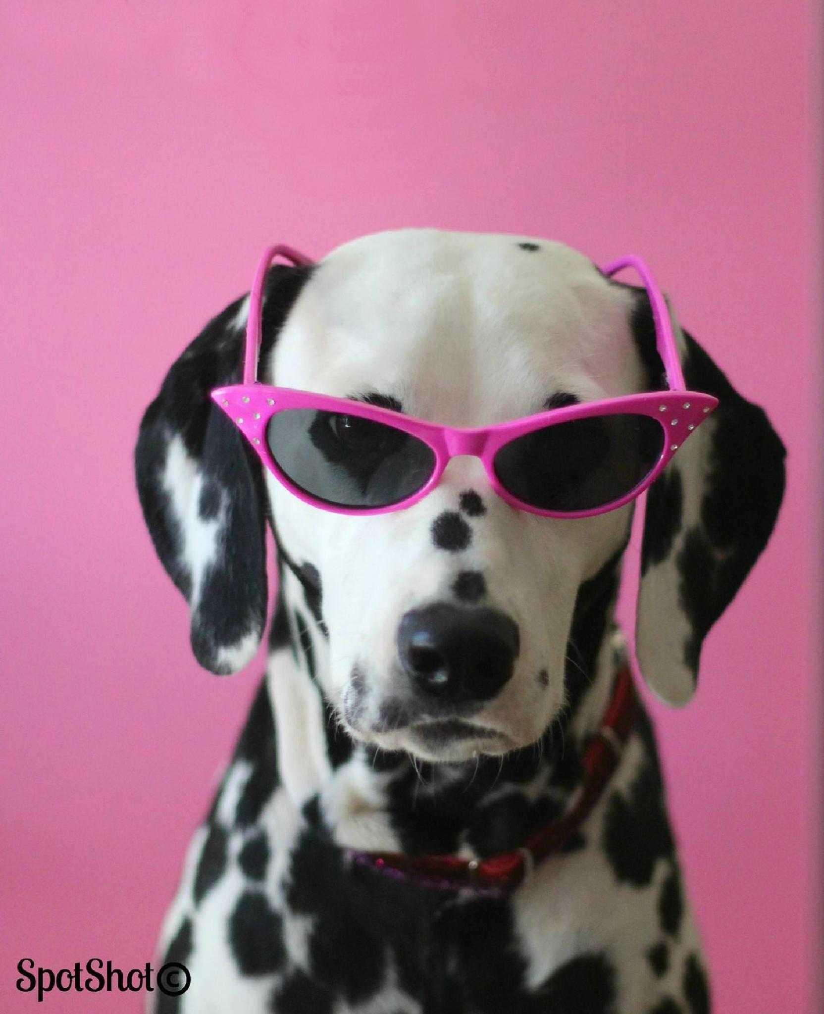 Pretty in pink by suzi.wahl.3