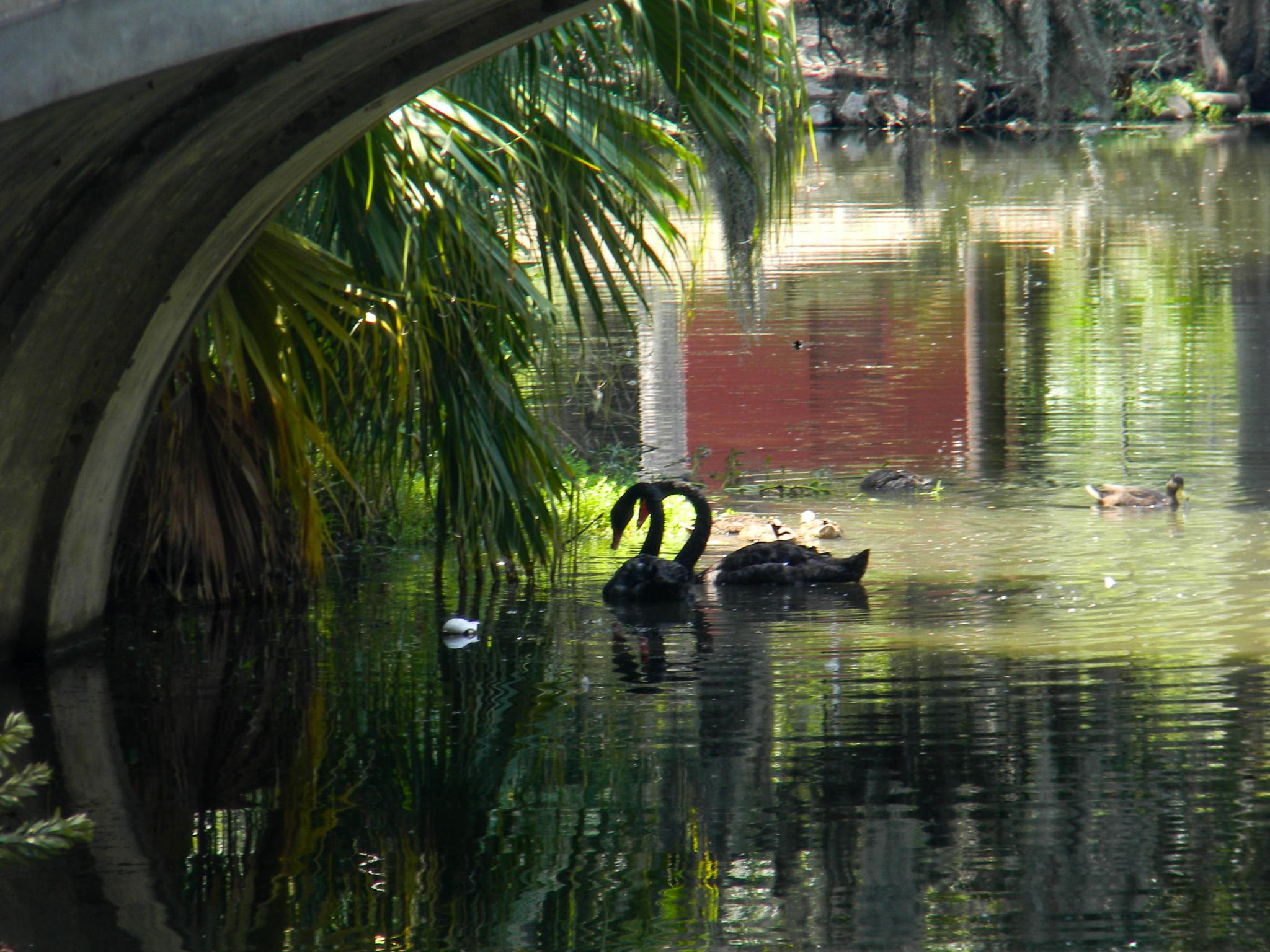 Waterfowl at New Orleans Sculpture Garden by The Beauty of Nature Photography by Nicole Crabtree