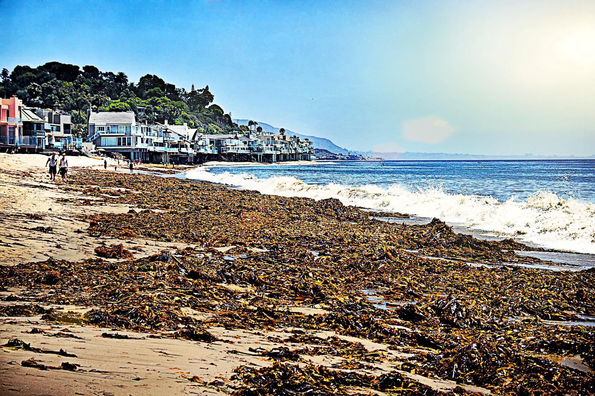 Walk in a seaweed plantation by Ragel Levi