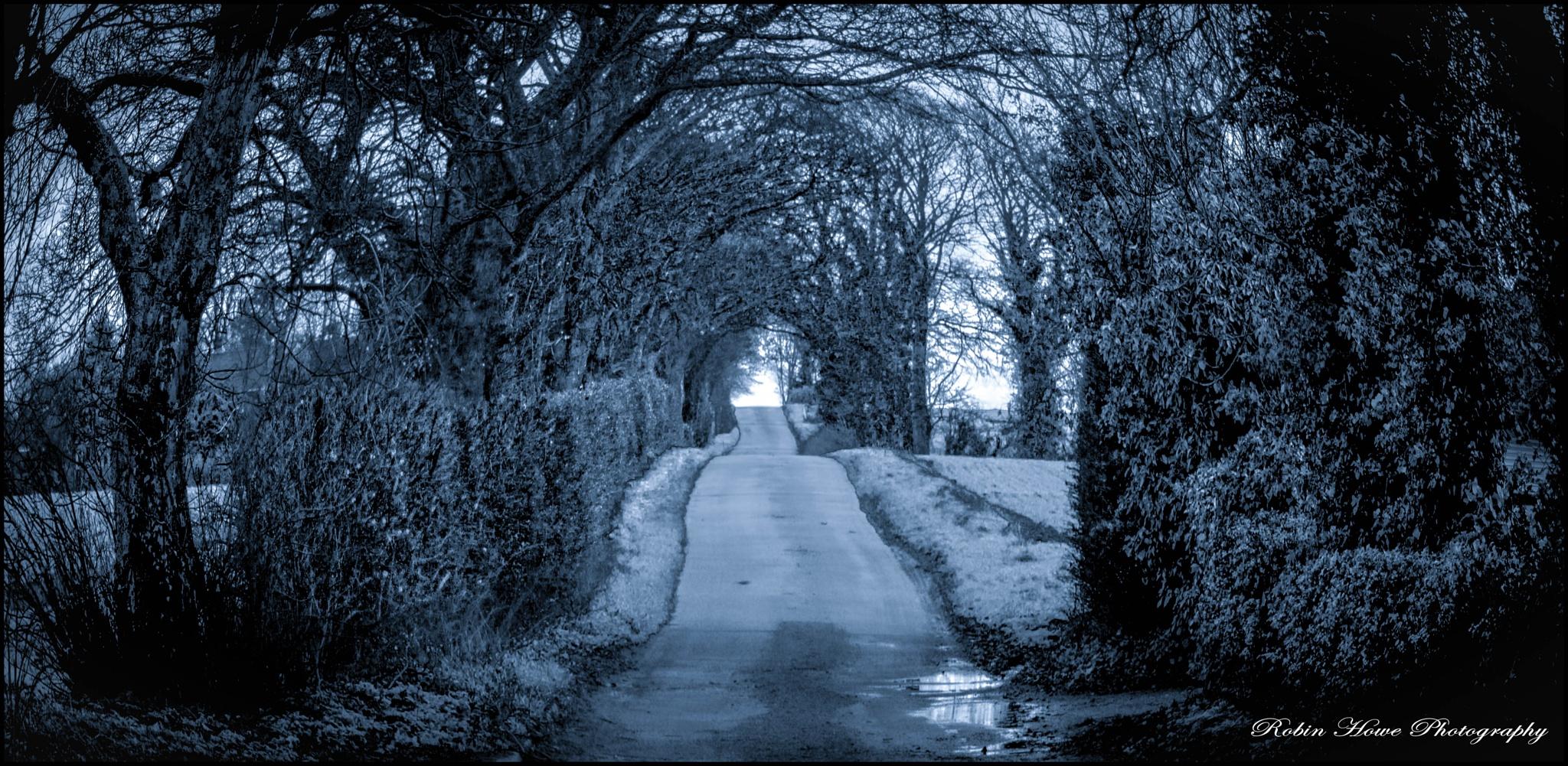 wintry Lane by robin.howe.56