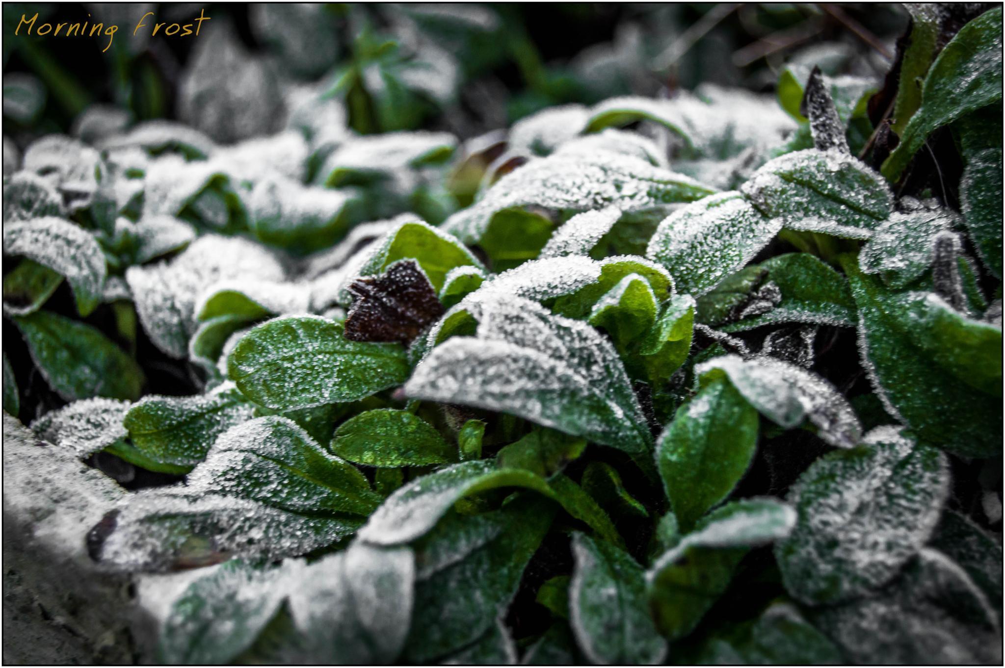Frost by robin.howe.56