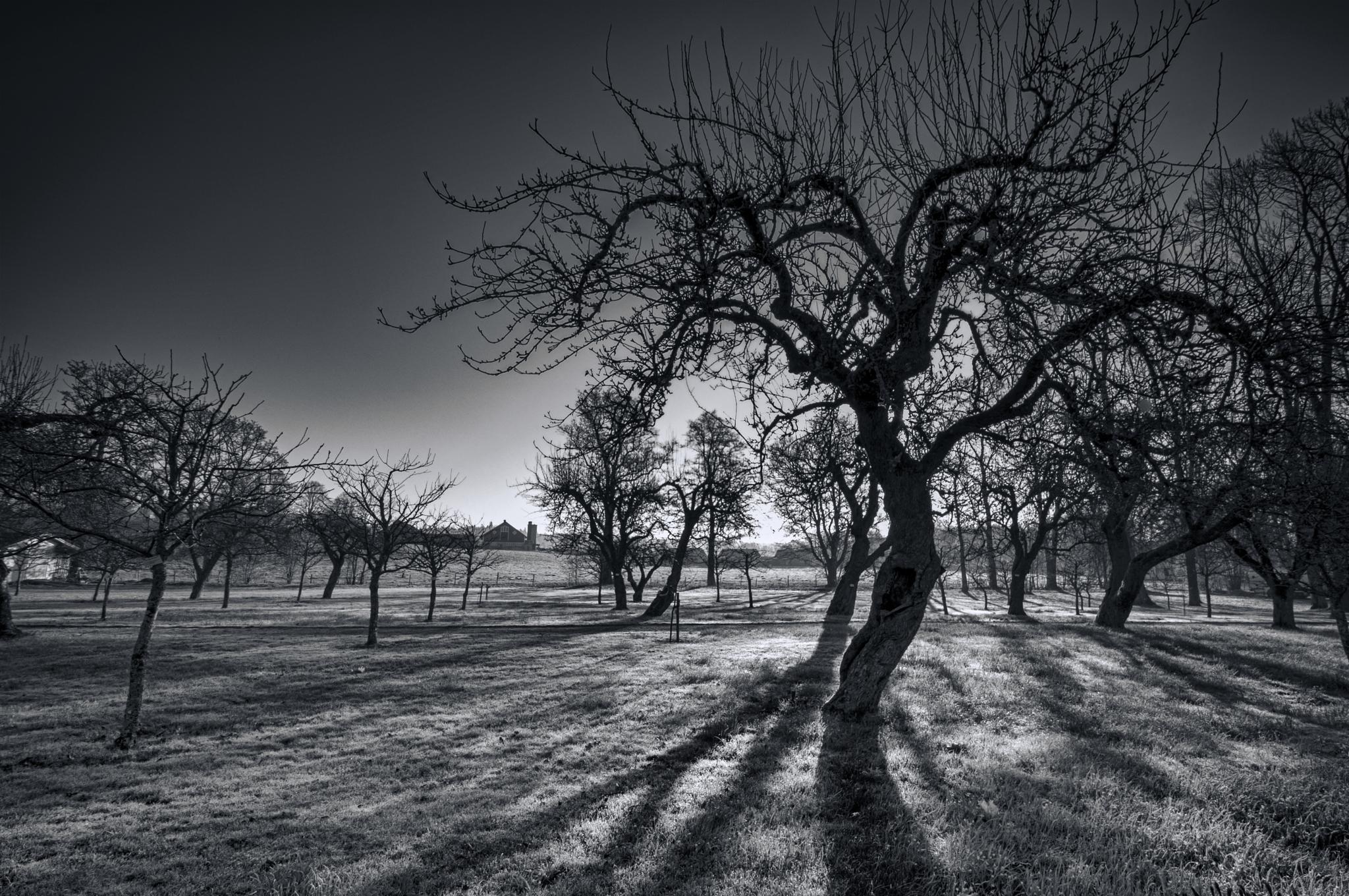 Morning shadows by romus.ramstrom