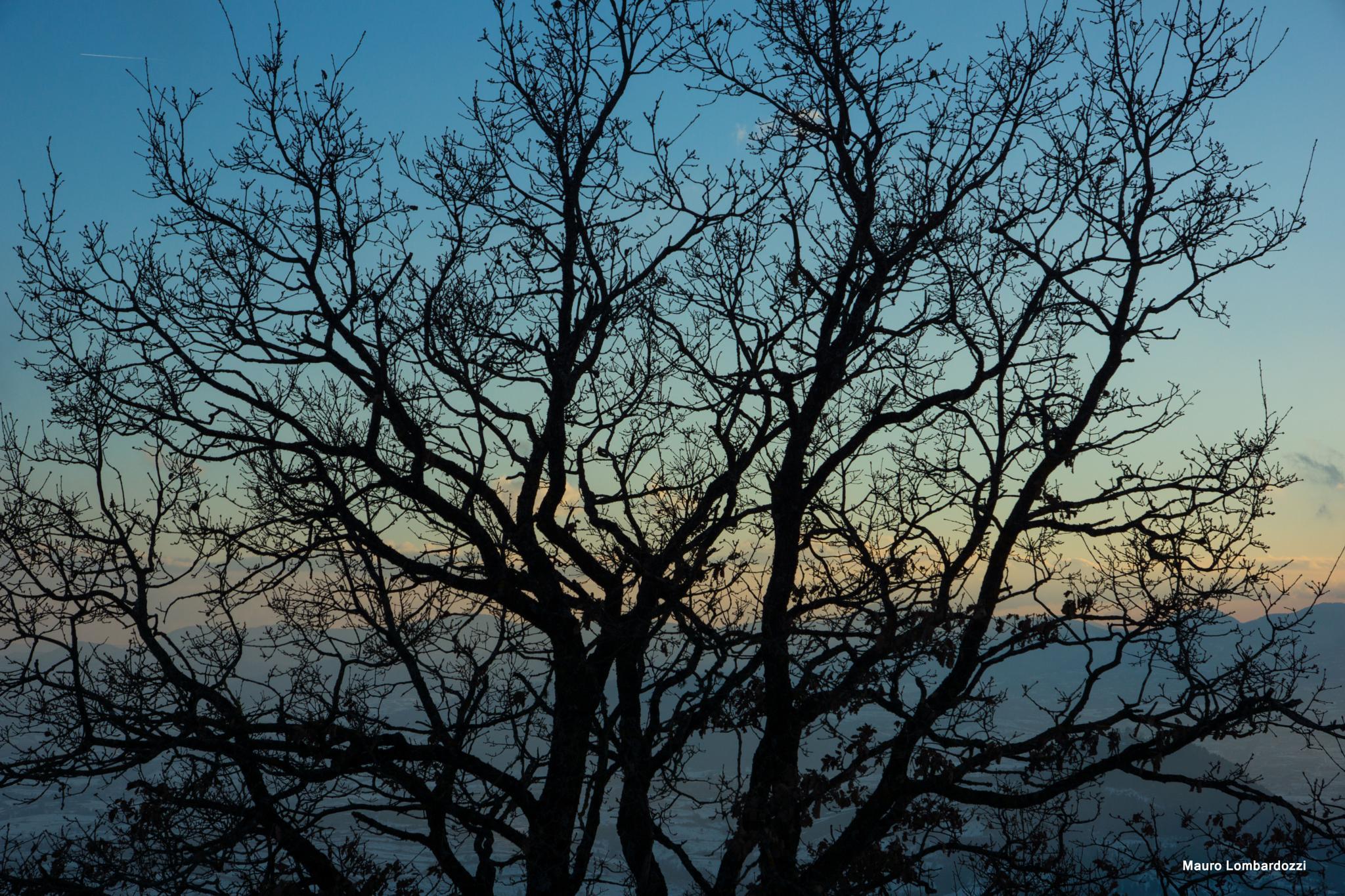 Tree's silhouette by mauro.lombardozzi