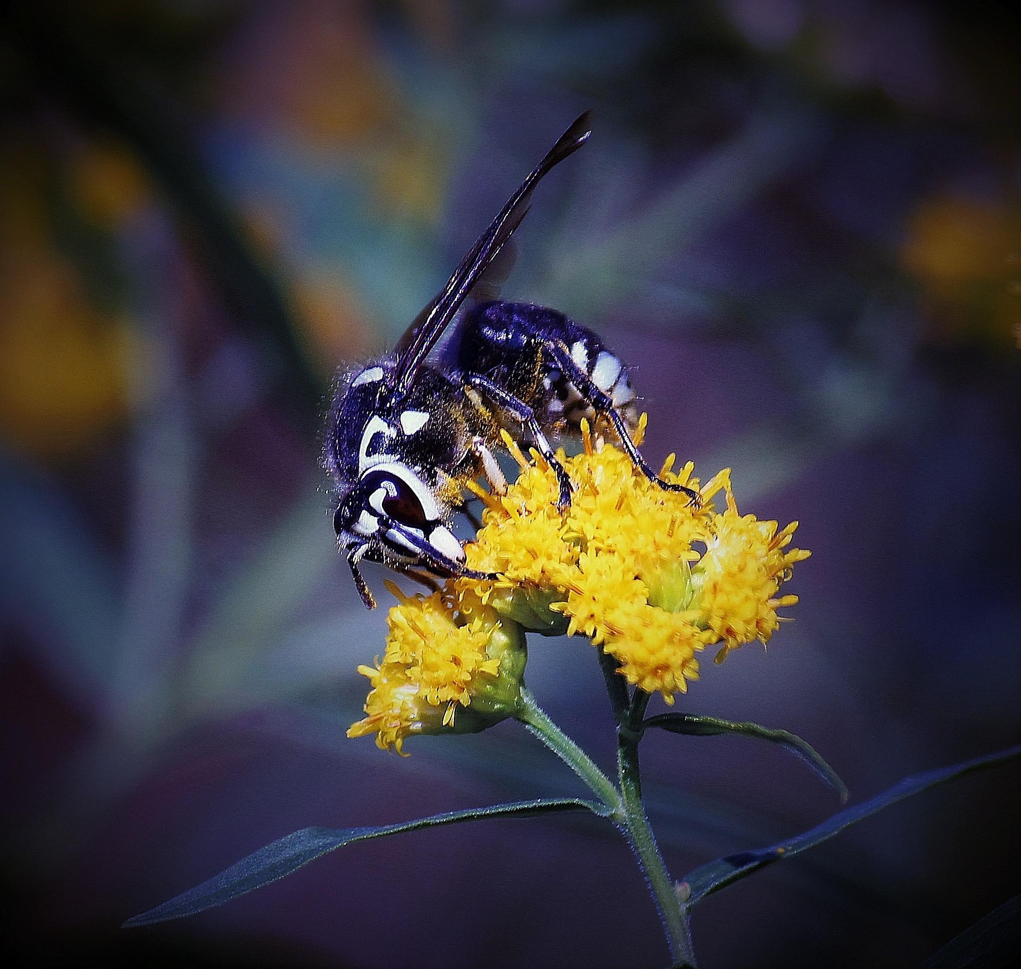 """Whats the buzz?"" by Sue Delia"
