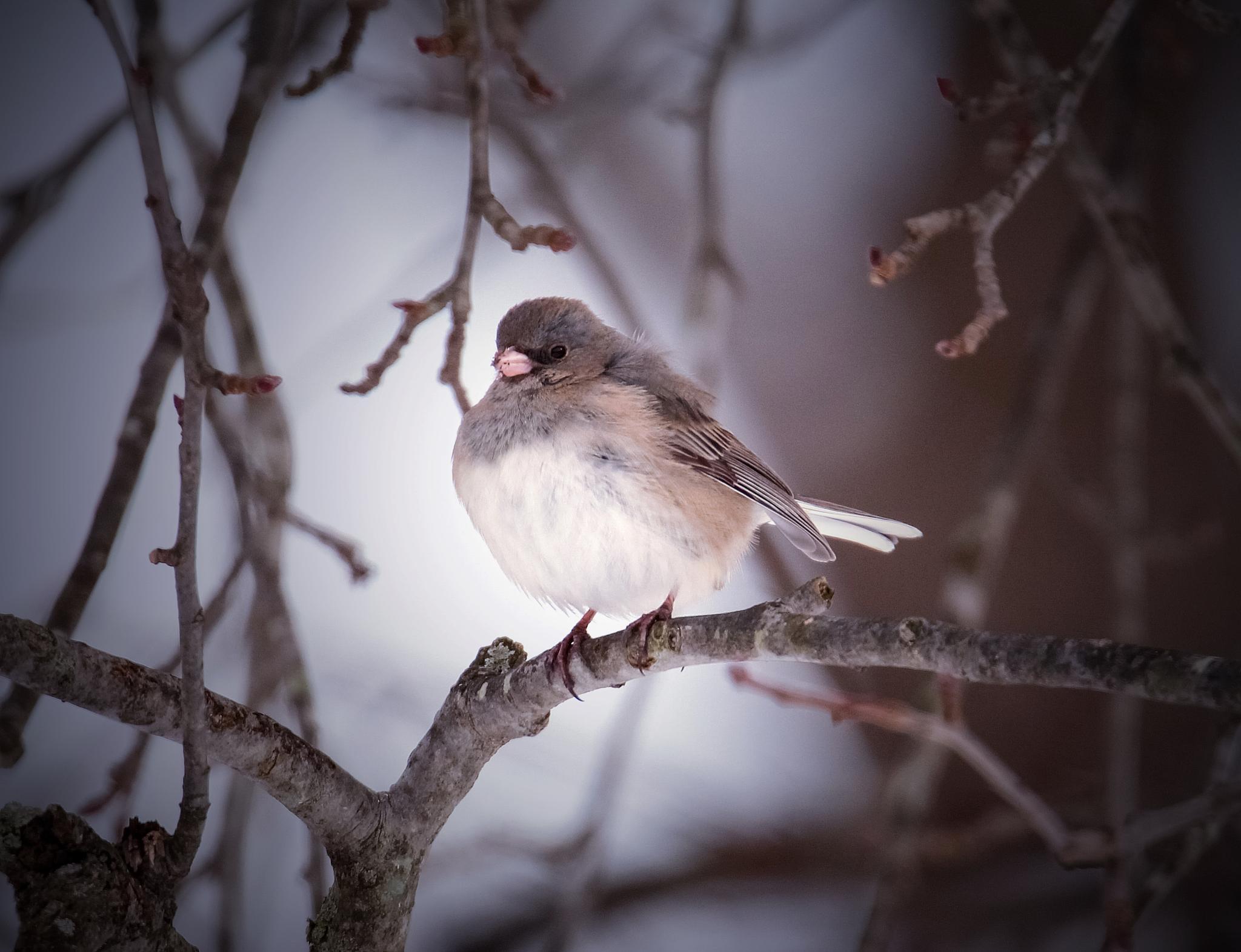 Winter puff by Sue Delia