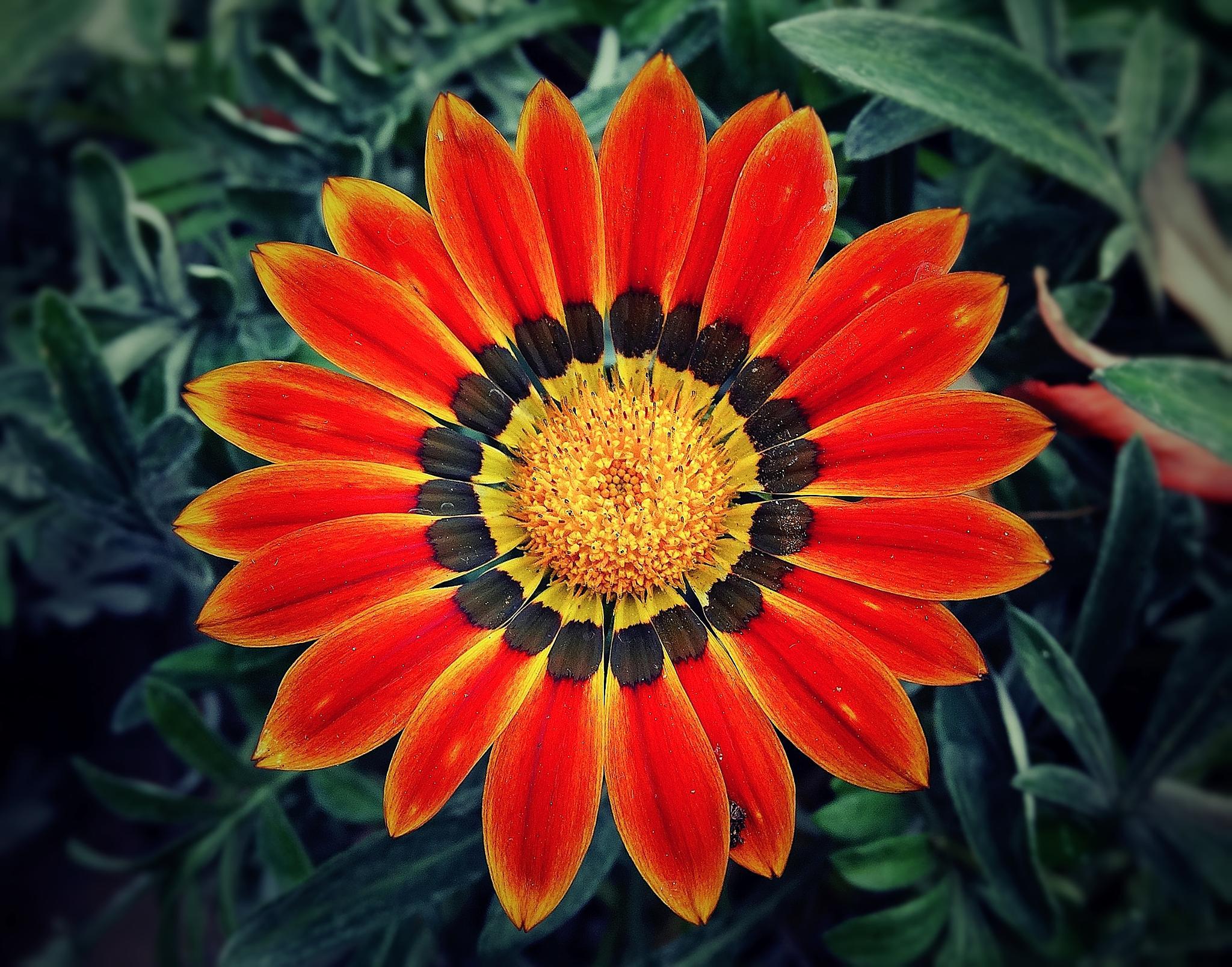Pinwheel by Sue Delia