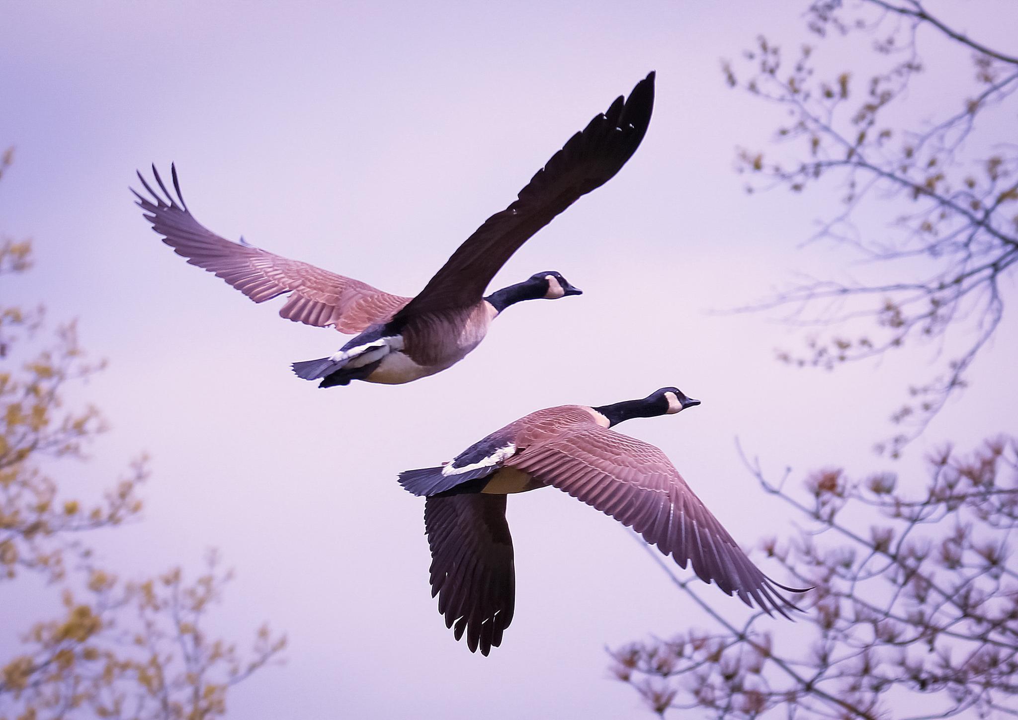 Flying high by Sue Delia