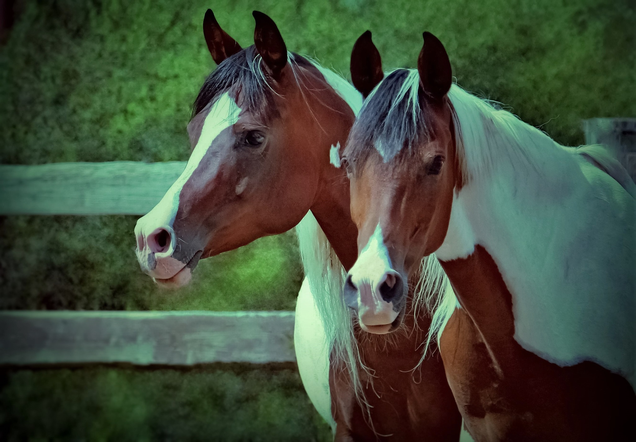 Proud Mares (mom&daughter) by Sue Delia