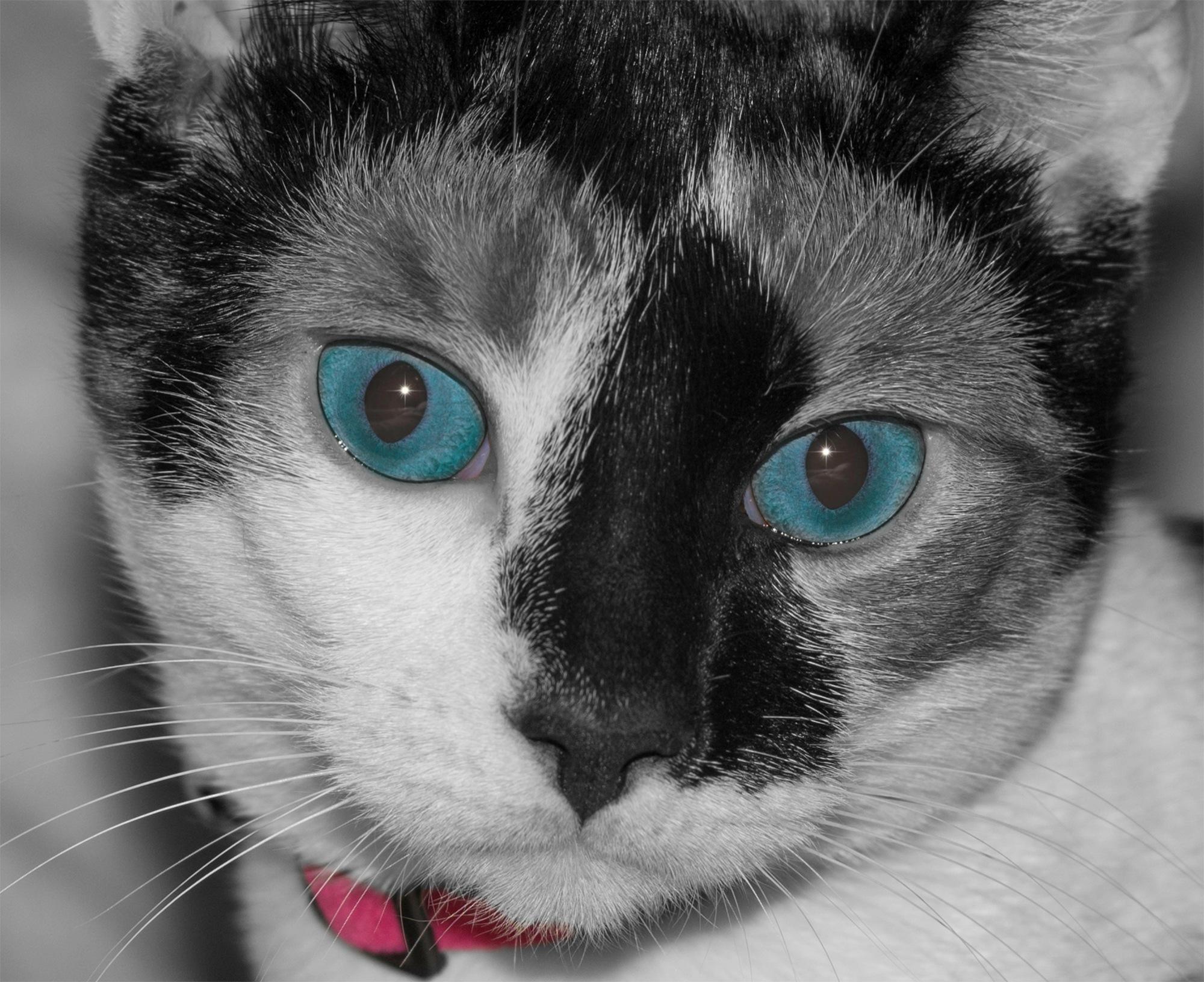 Photo in Random #cat #feline #animal #colour #eyes #portrait #whiskers