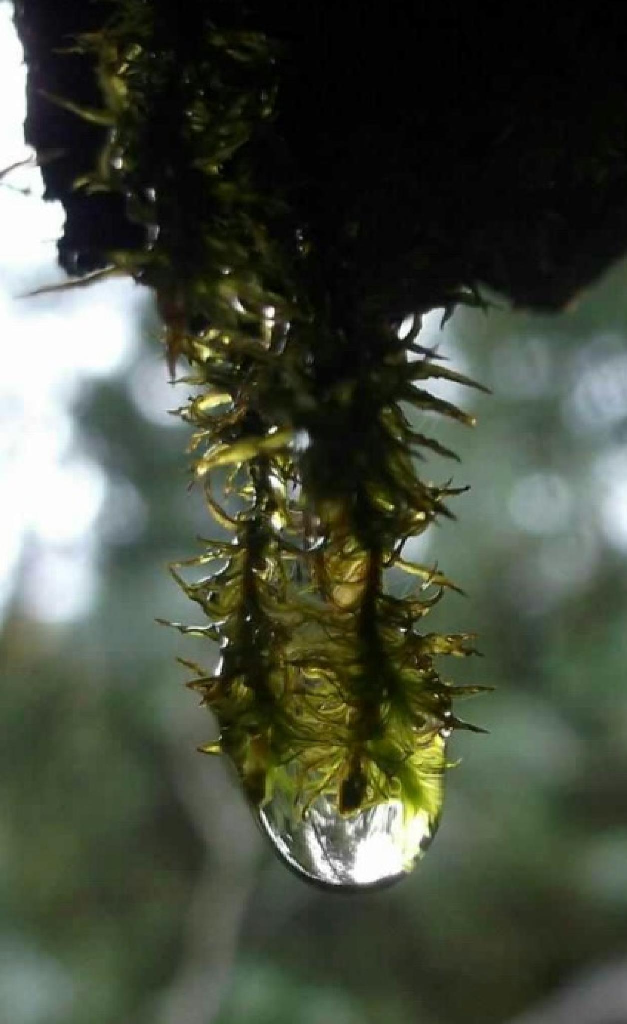 moss and rain by samuelh.crane