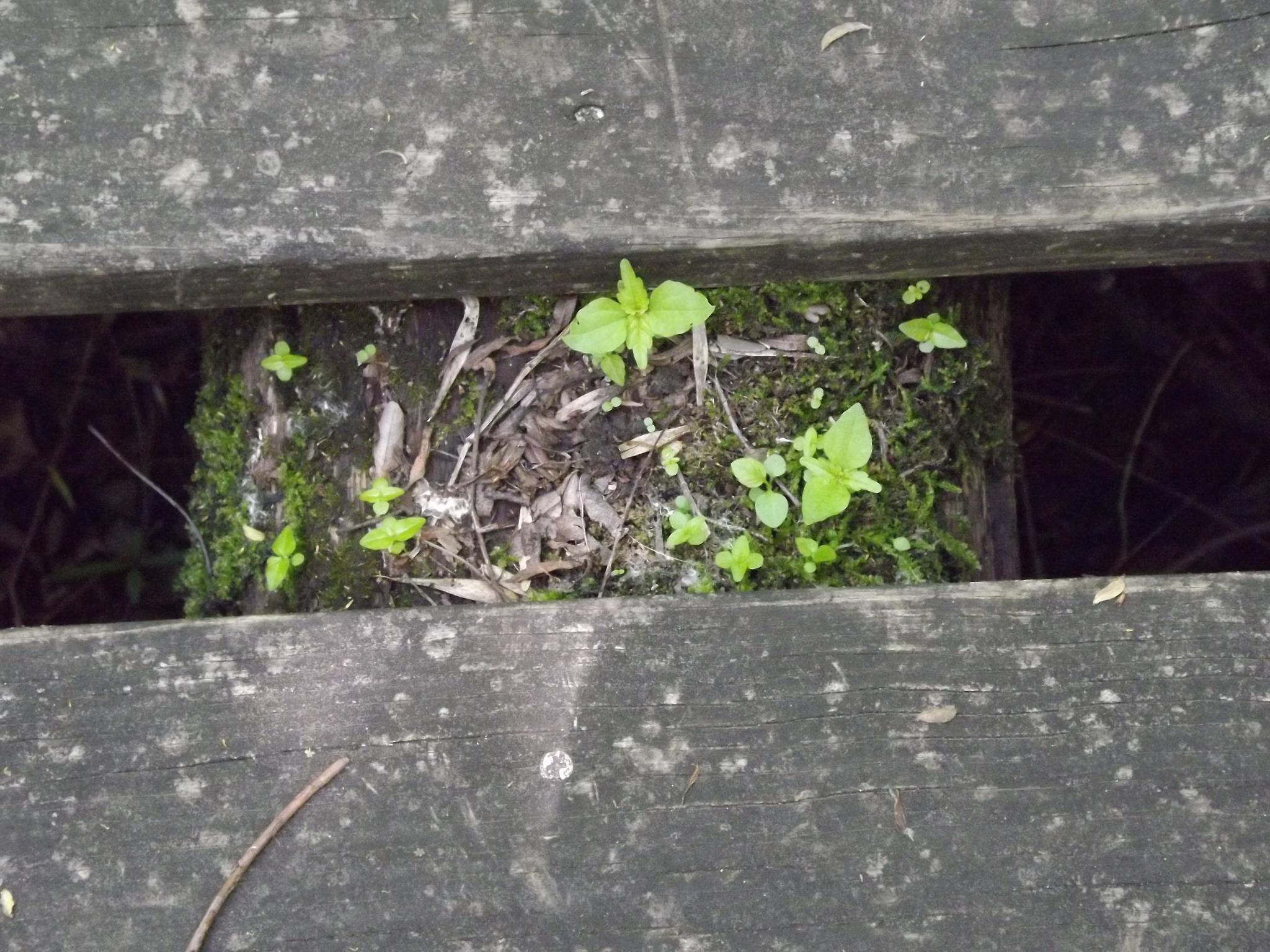 Peeking Up Through the Cracks by erica.english.522