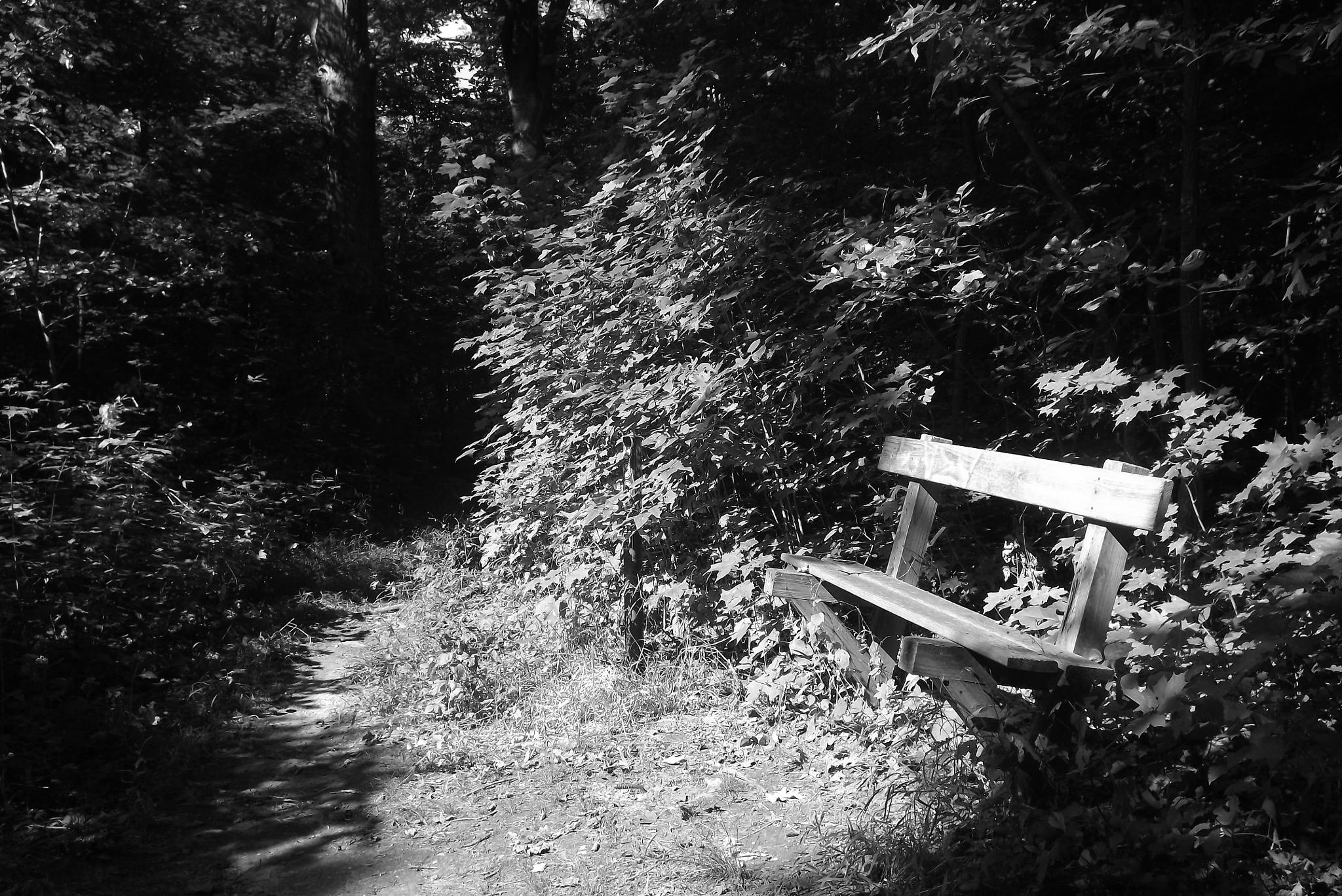 Lonesome Bench by erica.english.522
