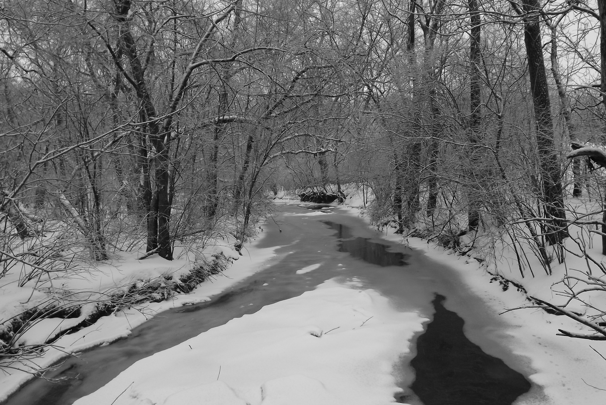 Photo in Nature #winter #ice #snow #woods #black and white