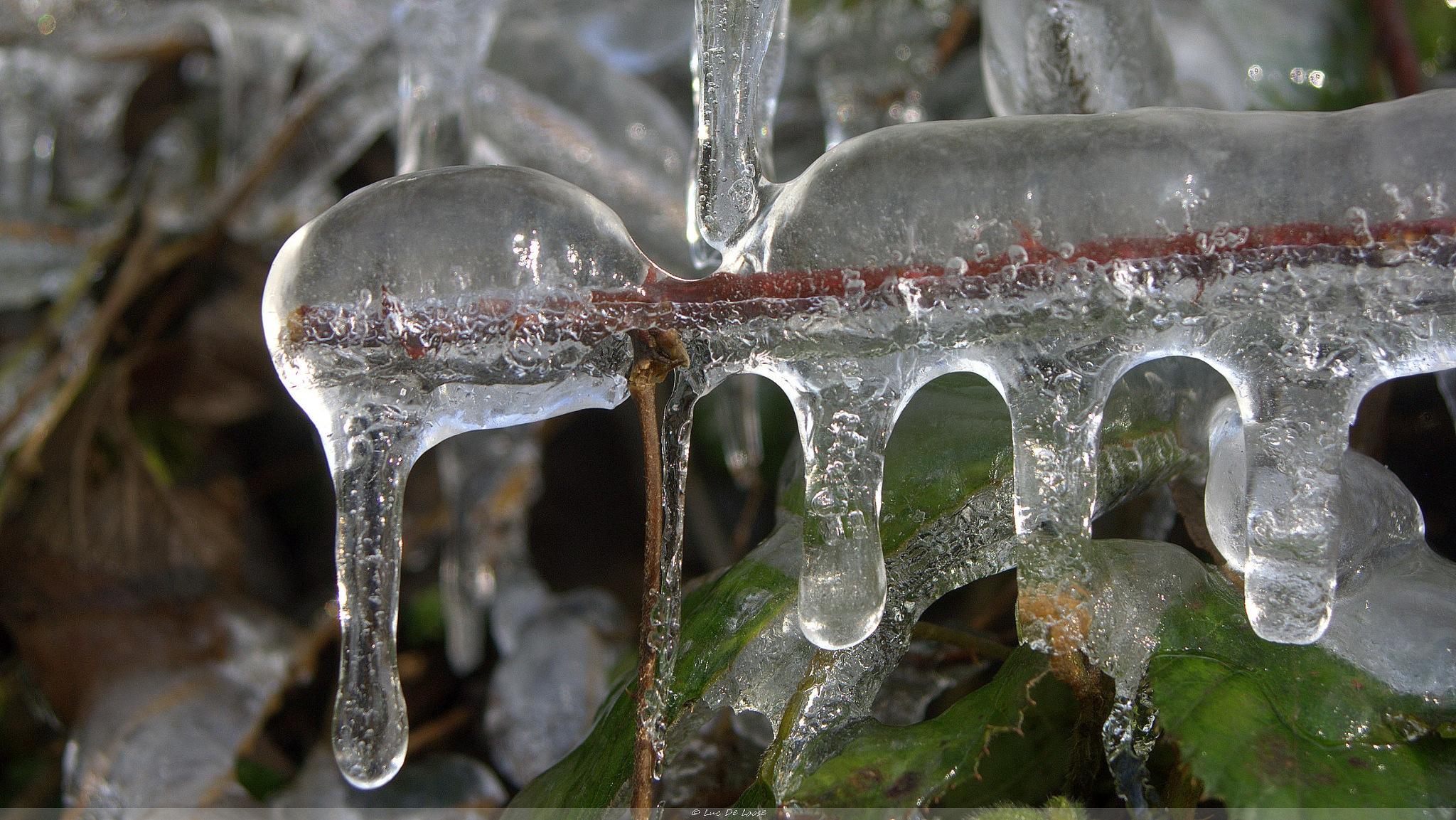 Frozen by Luc DL