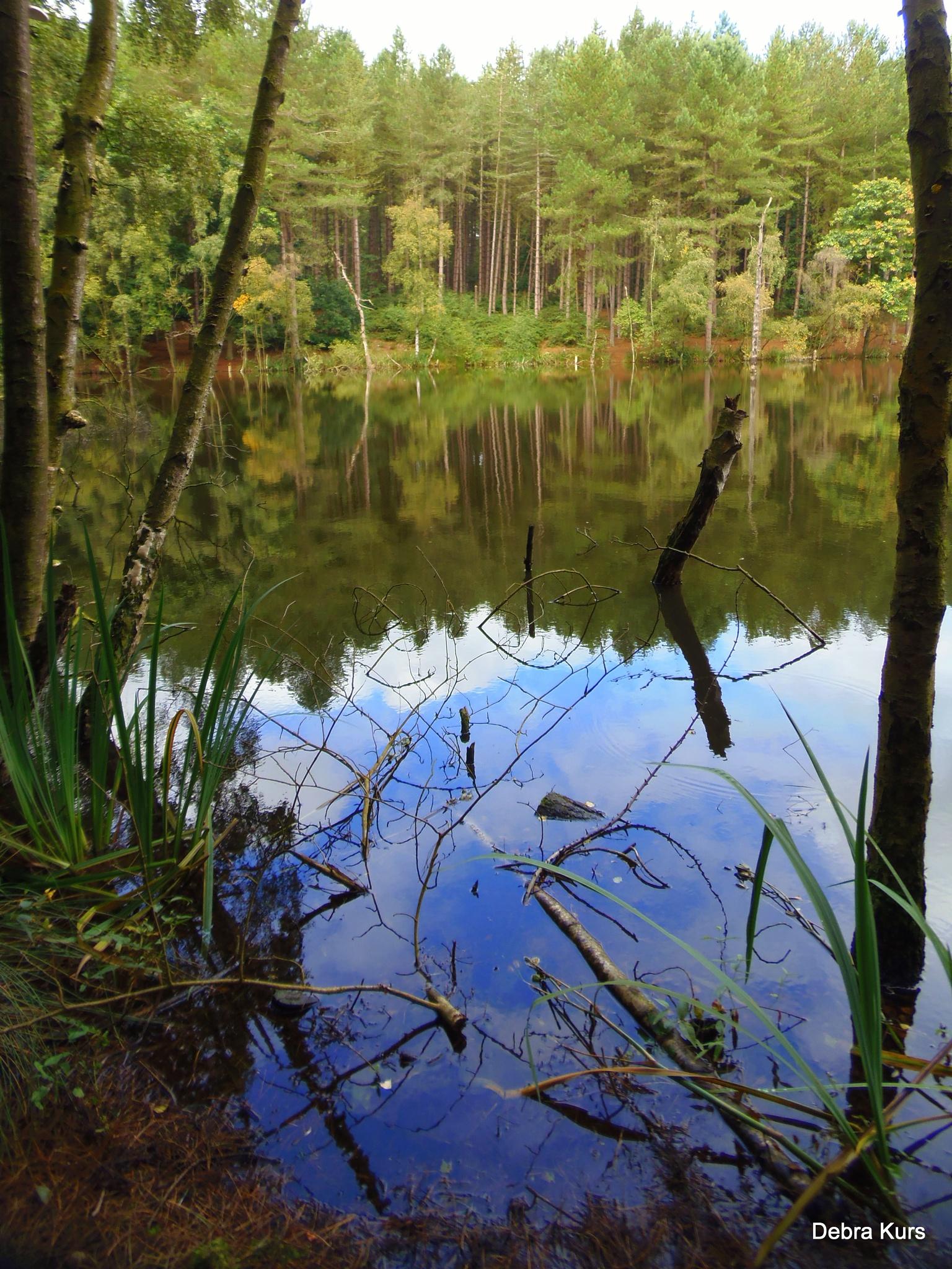 Delamere Lake by Debra Kurs