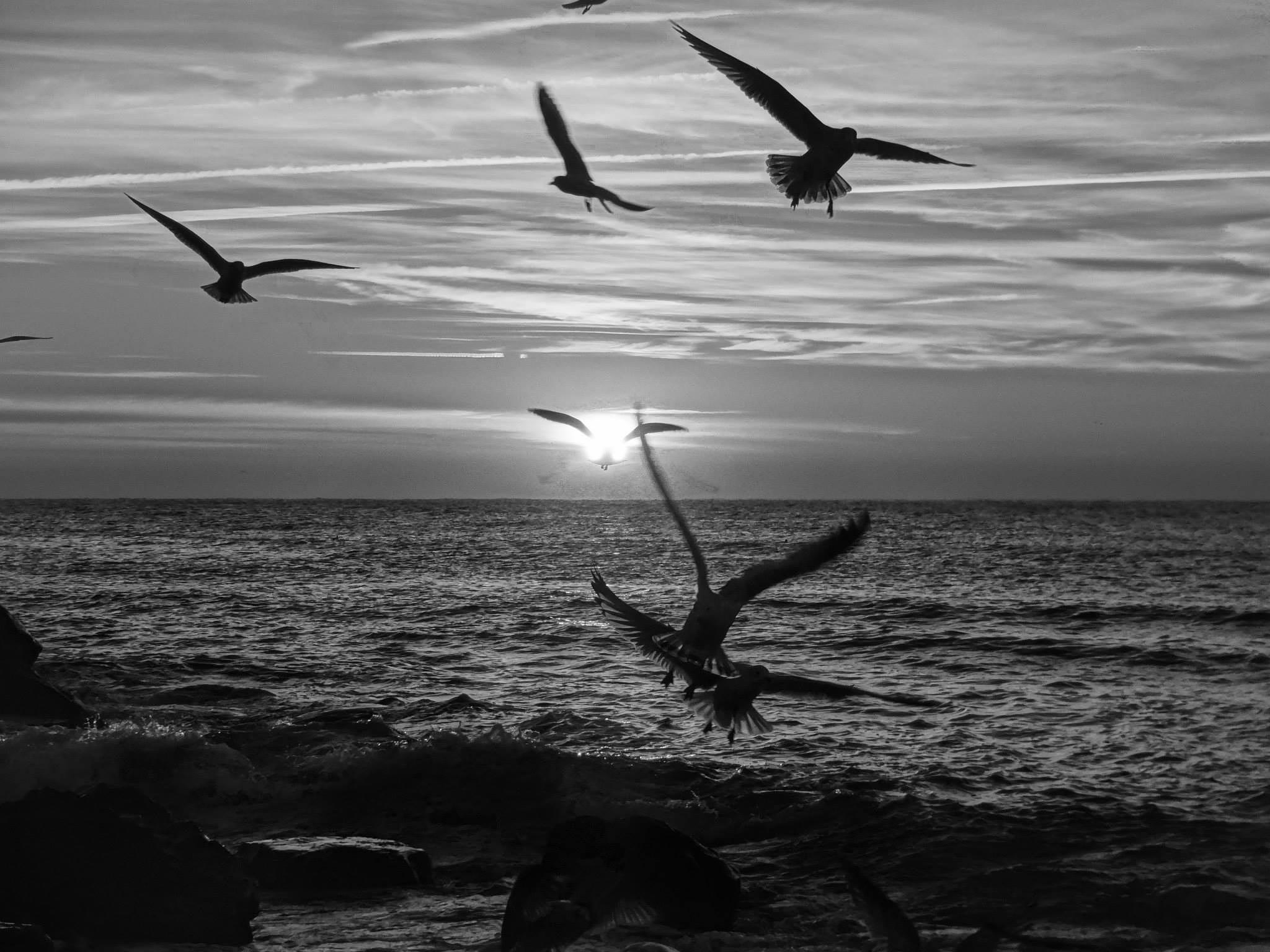 Untitled by david.strollo.5