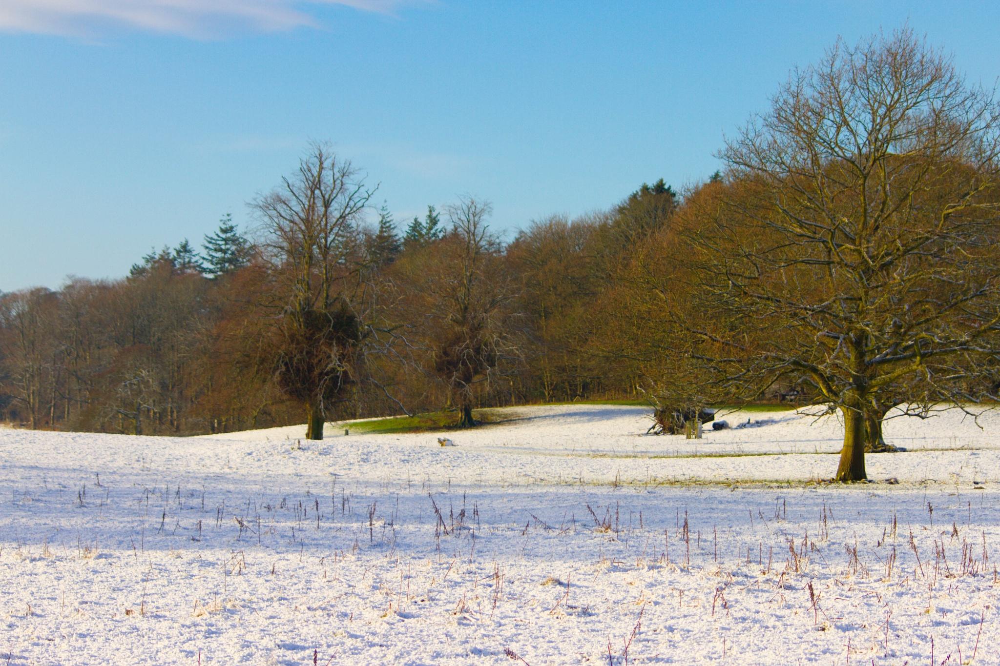 Winter Wonderland. by Tony Banks