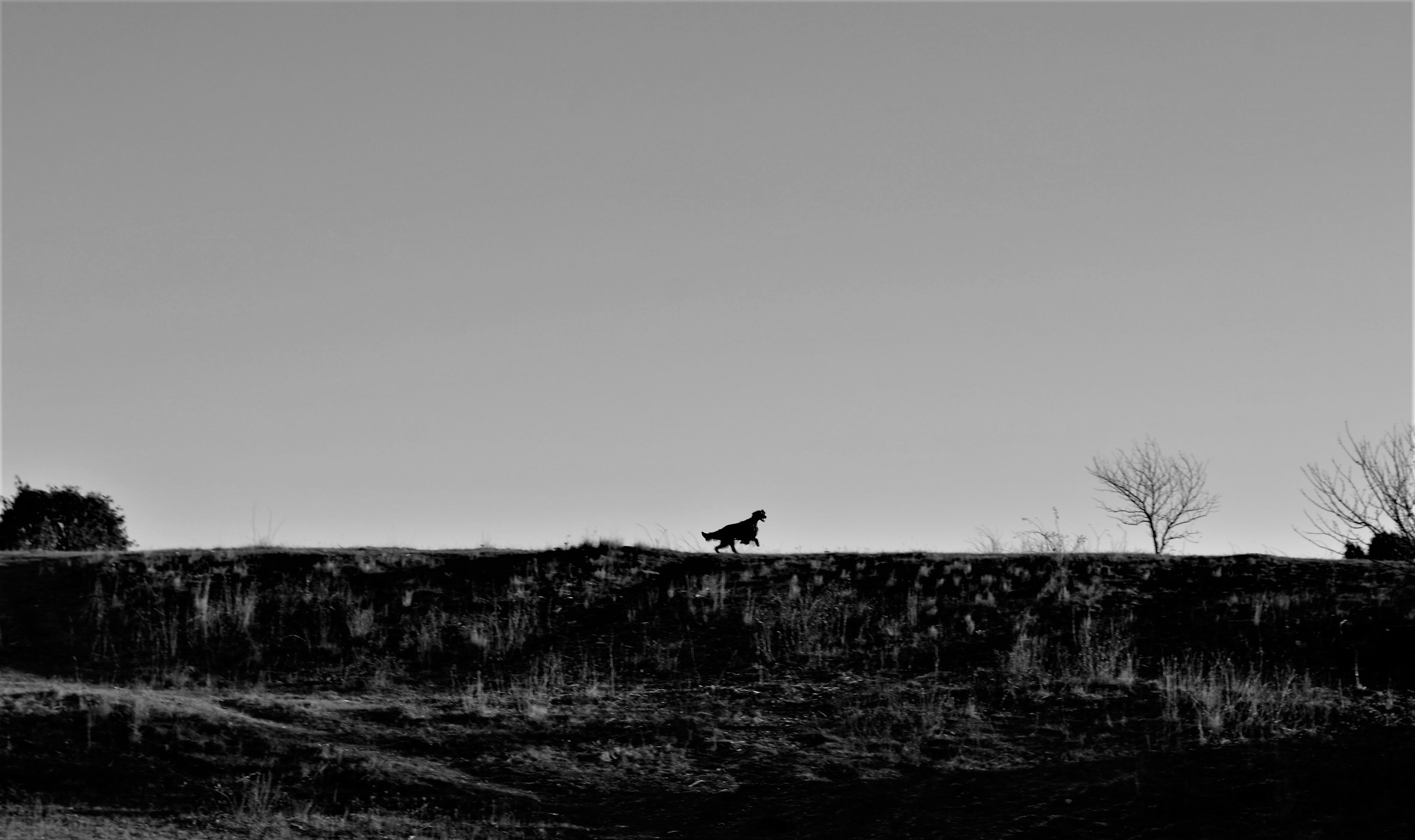 On my way by Petra Brewitz