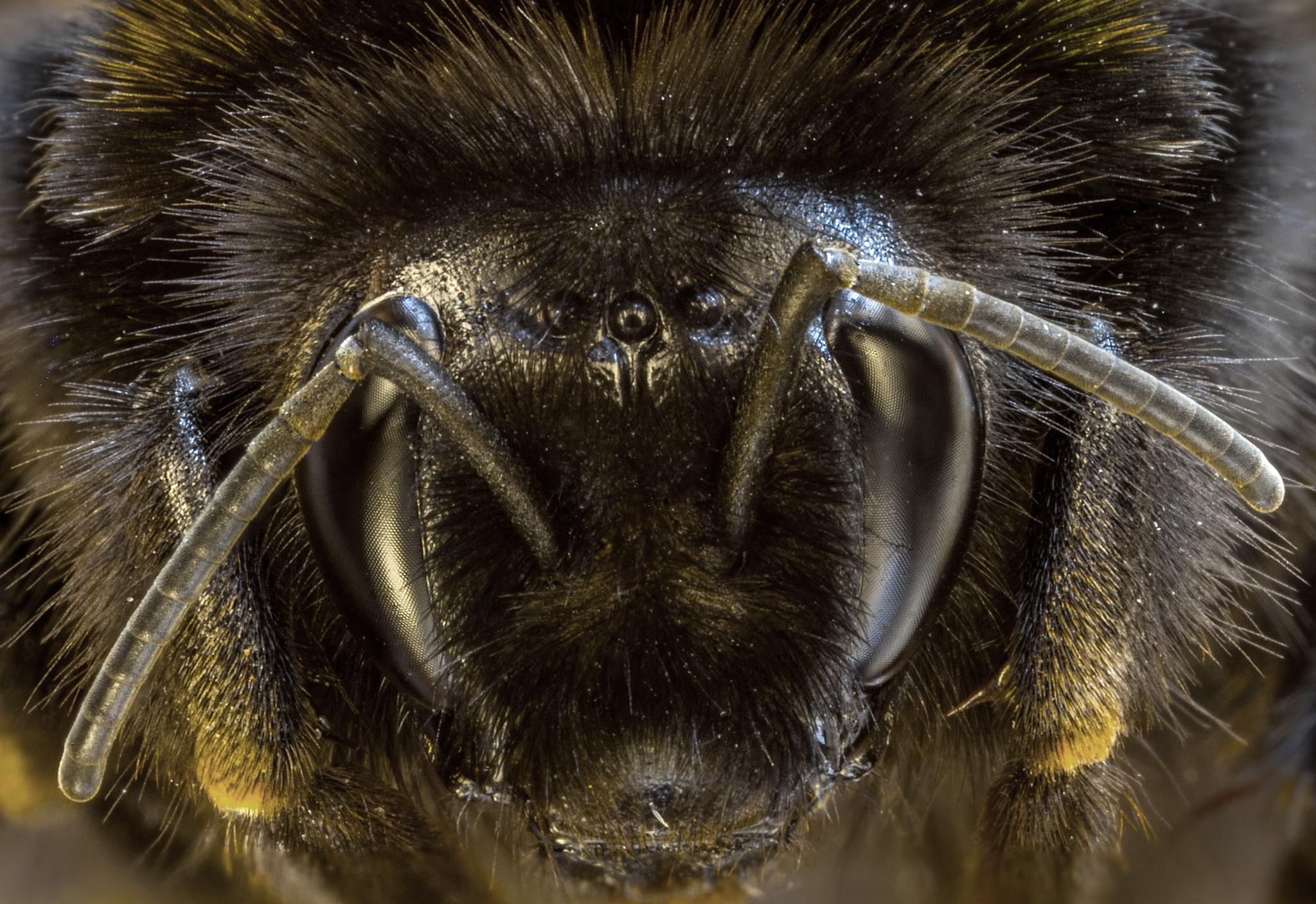 Transformer Bumble Bee by Anders Borglin
