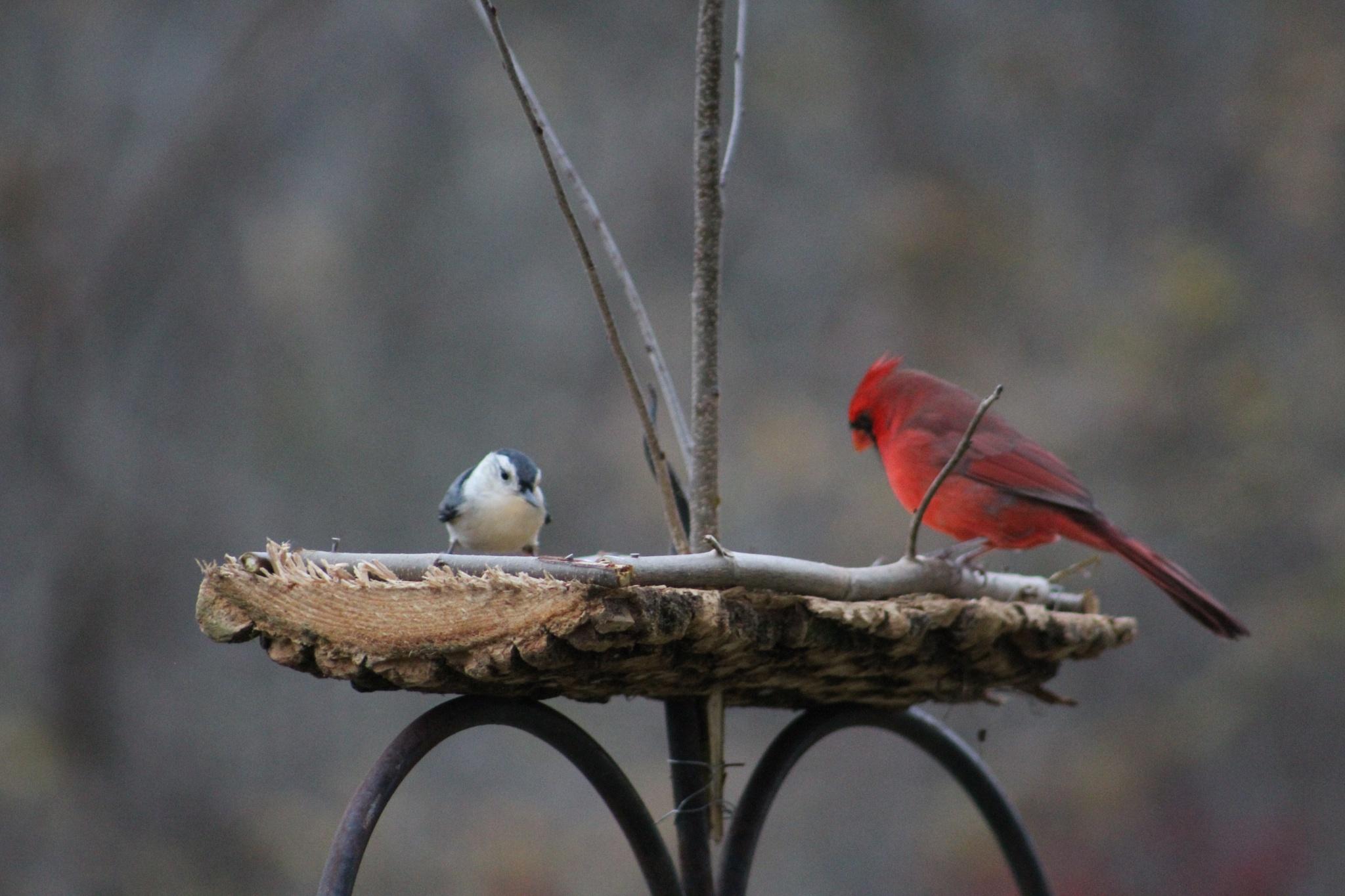 birds by Charlie McLain