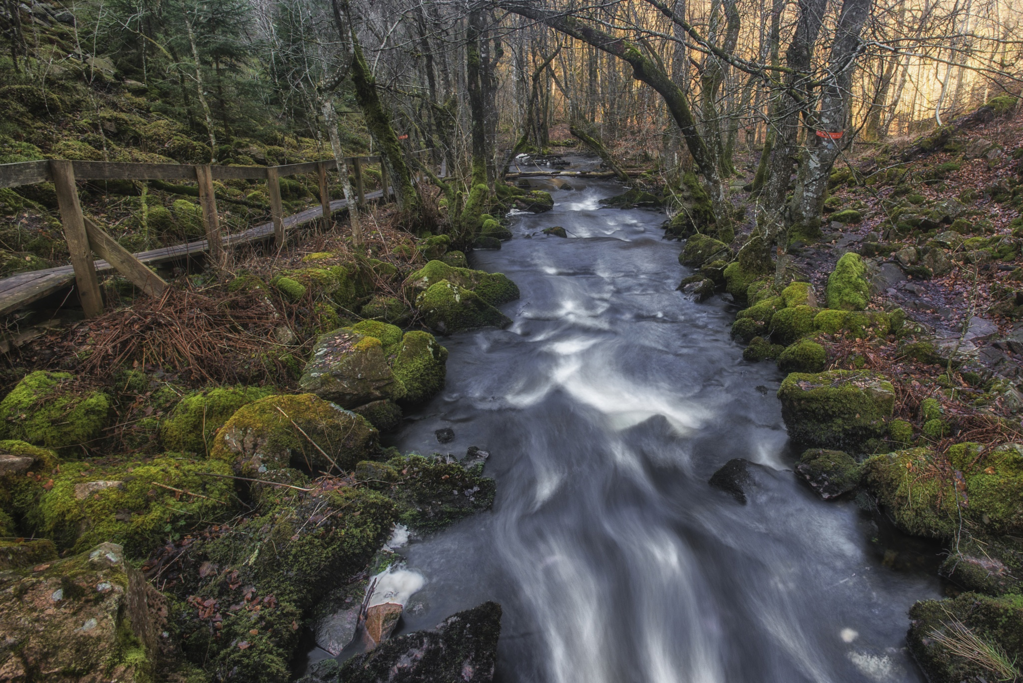 Babbling Brook by Leif Heering