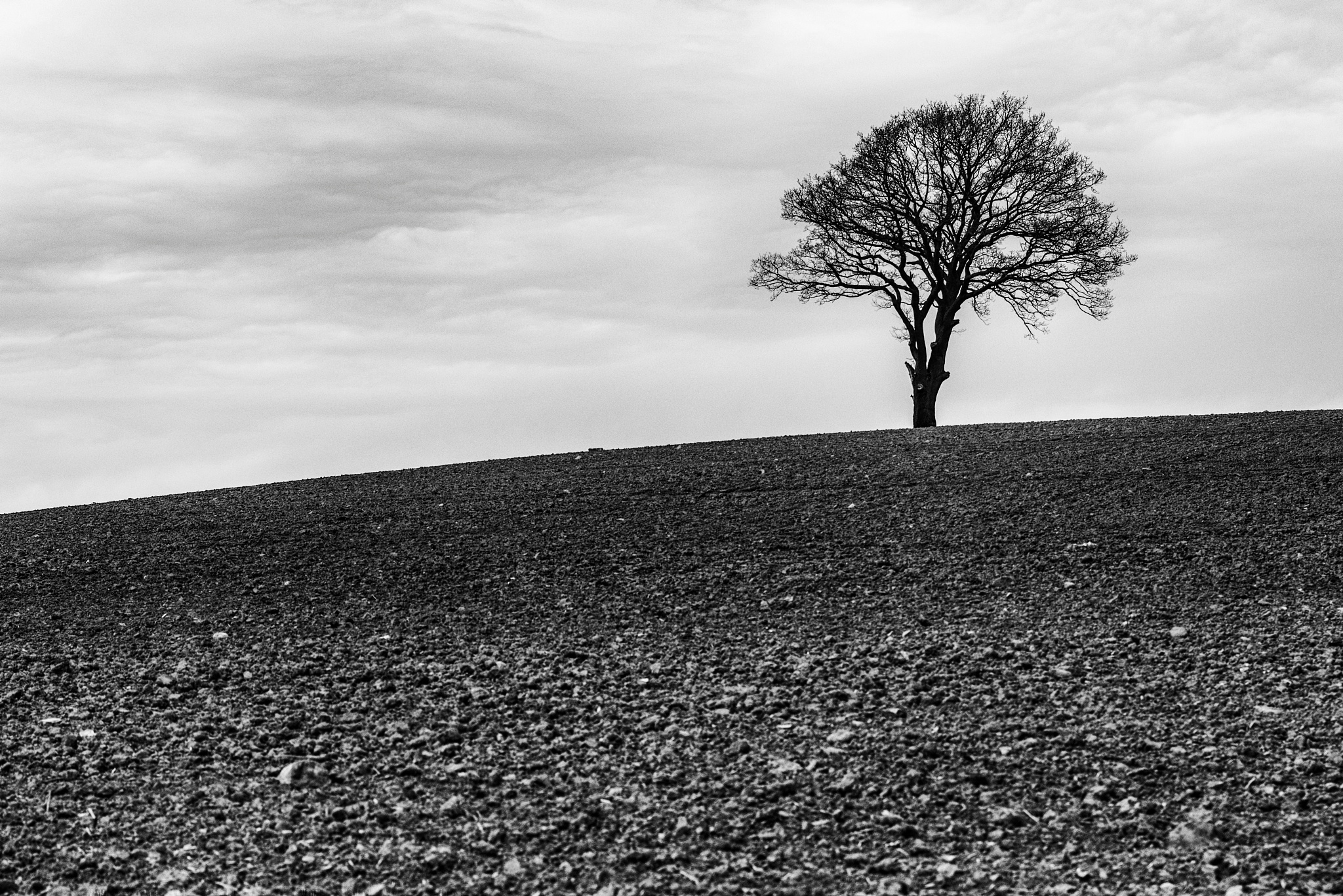 Loneliness by Leif Heering