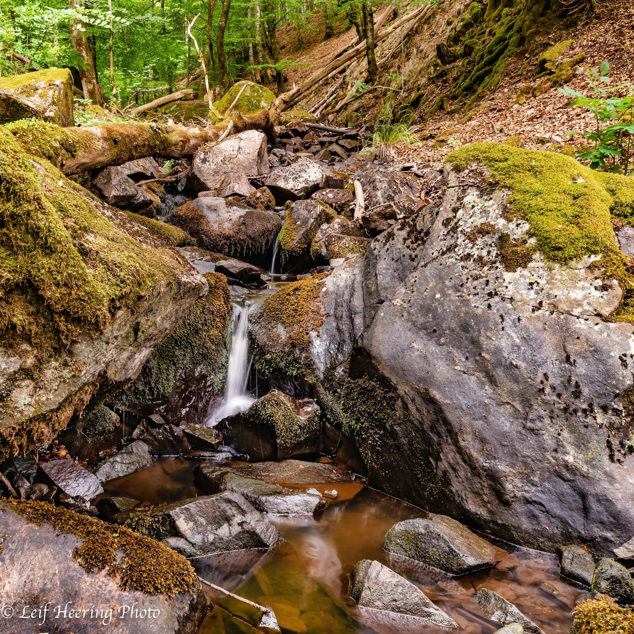 Puddling Brook by Leif Heering