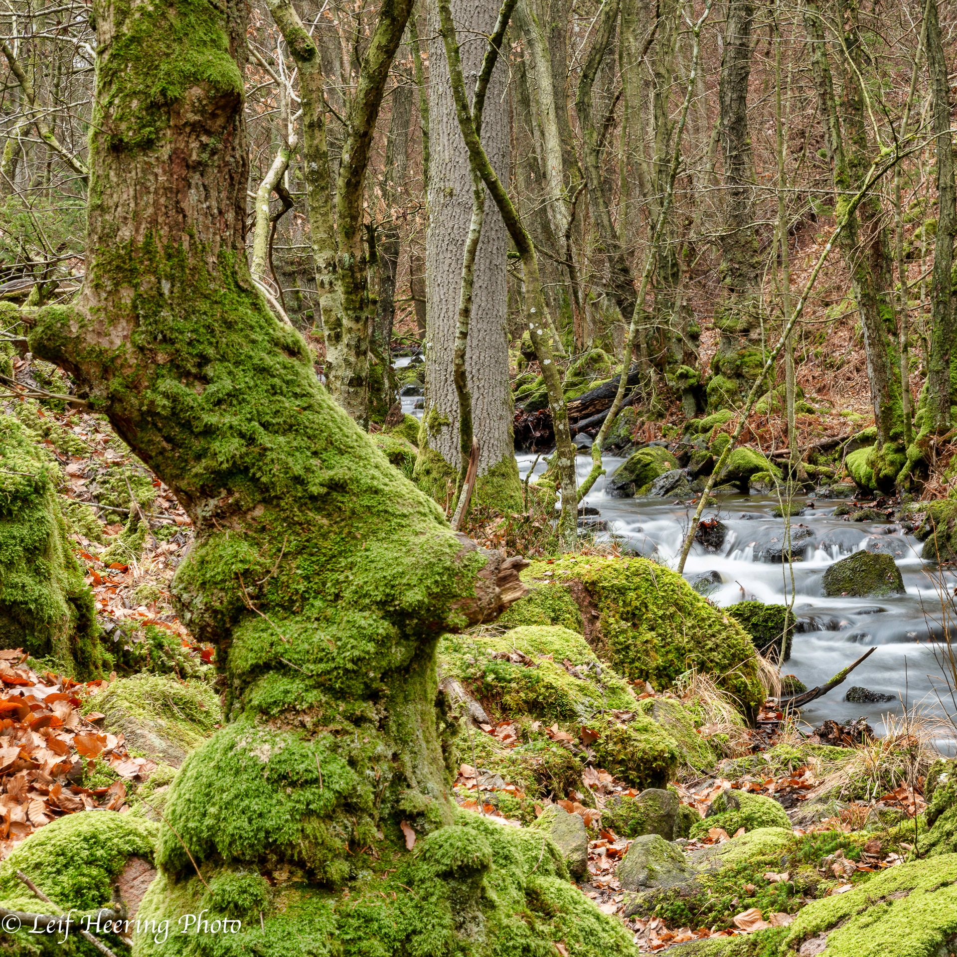 Moss by Leif Heering