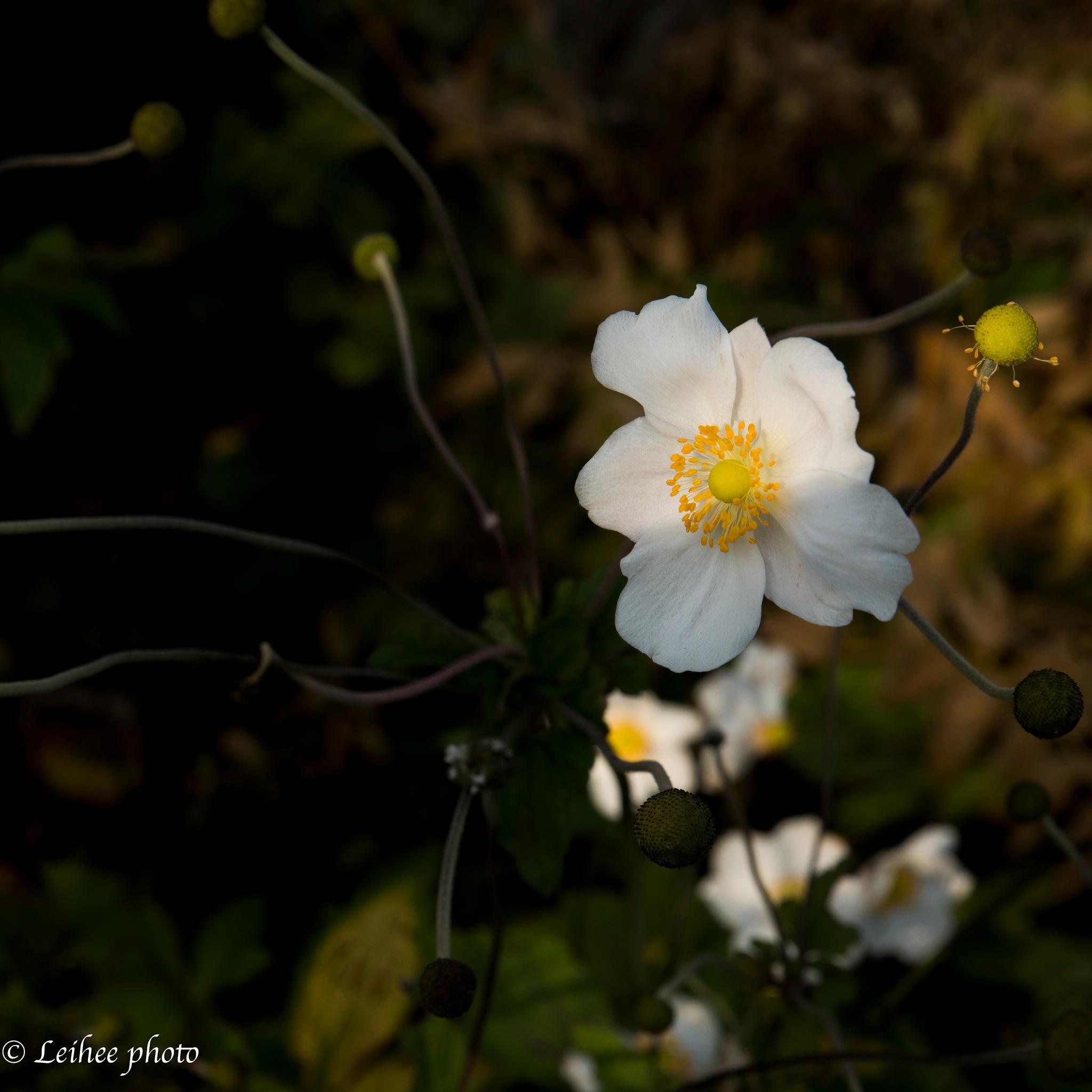 Flower by Leif Heering