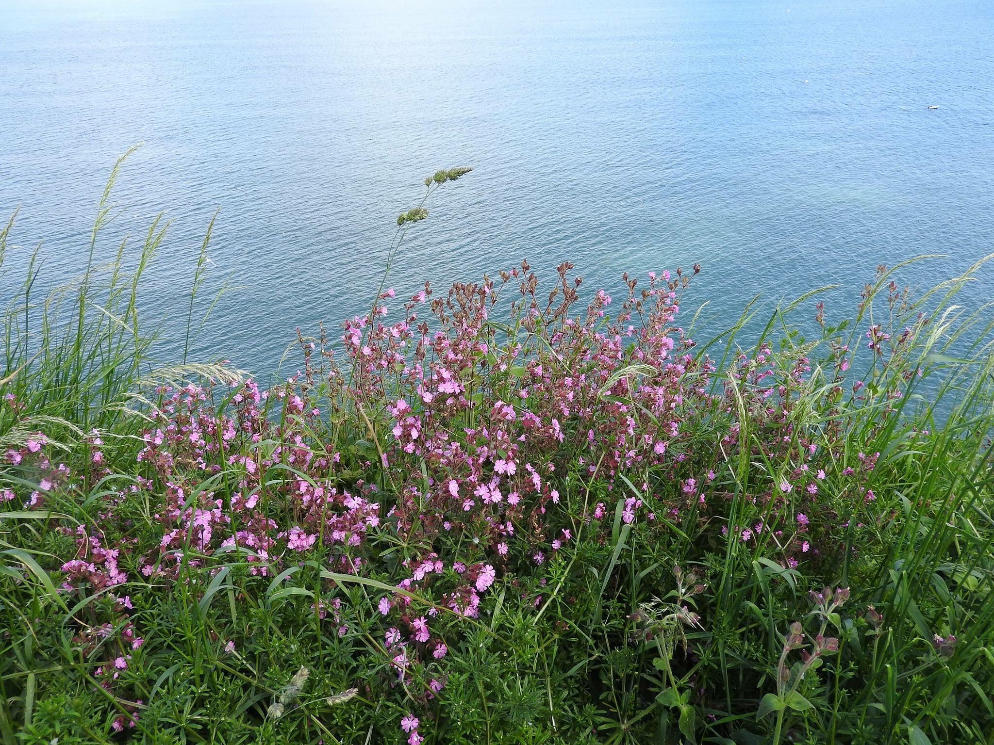 Flowers at bempton by Geeky1967