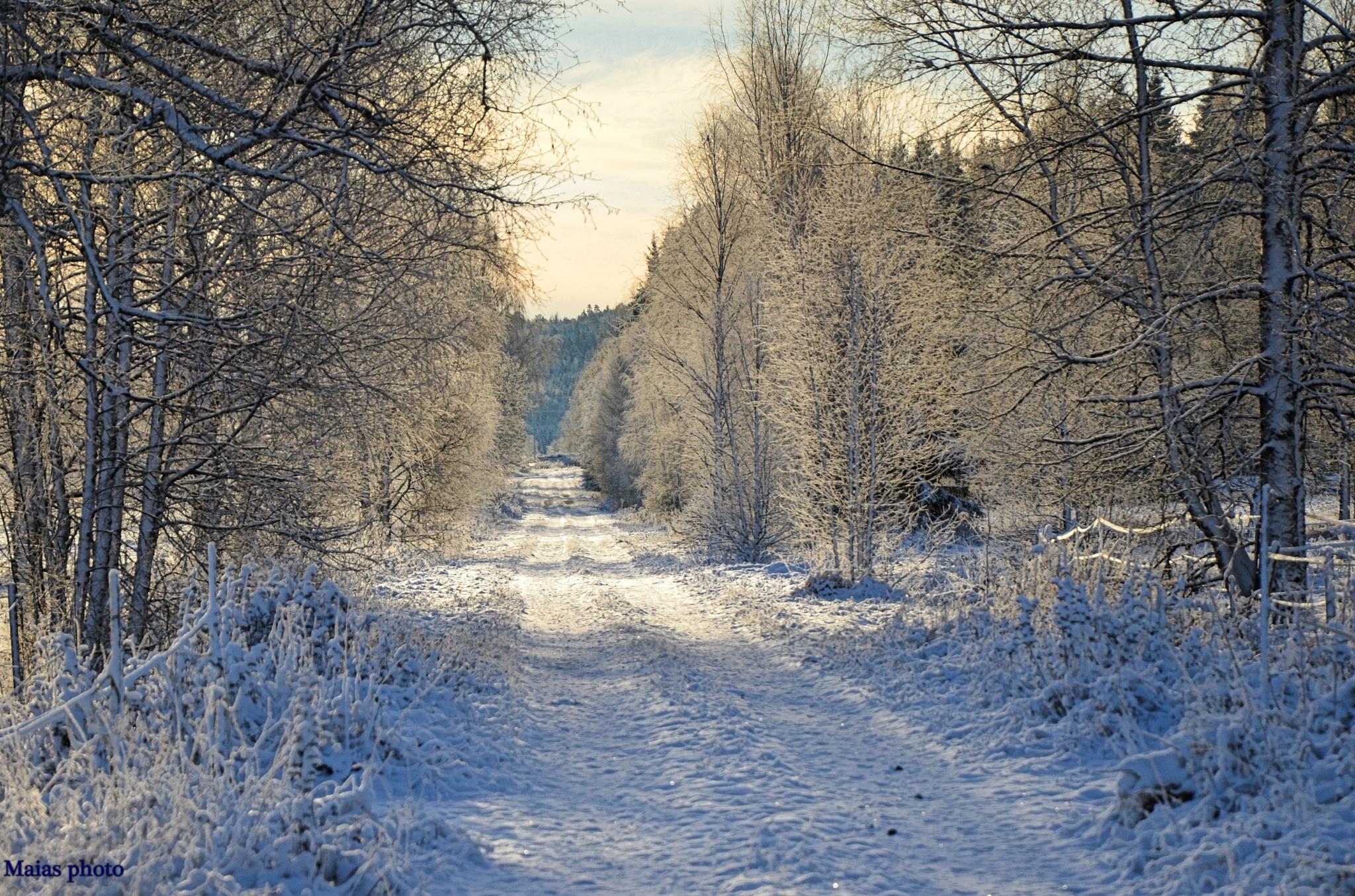 Vinterallé by Maias photo