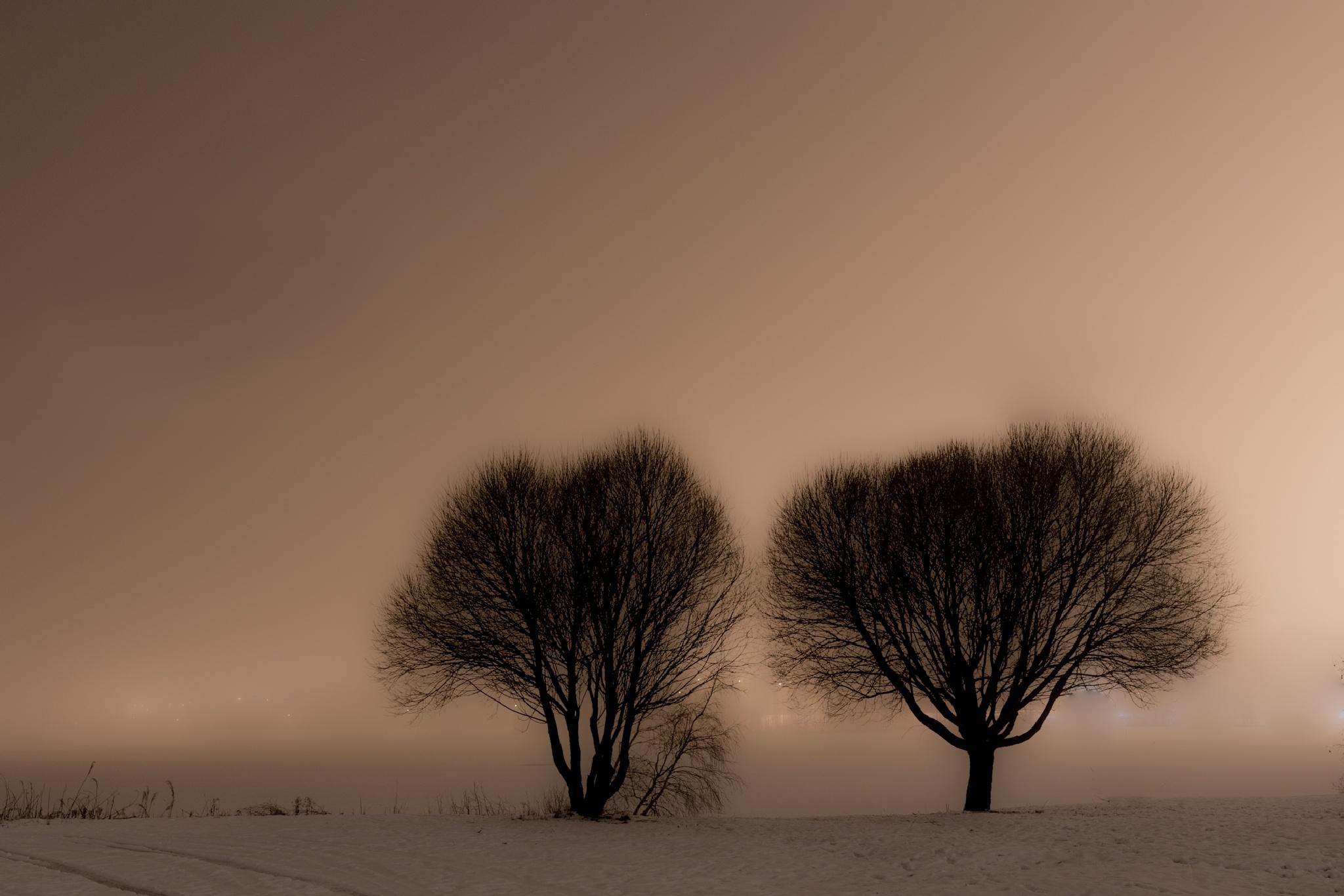 Morning fog by larsolov.gardelid