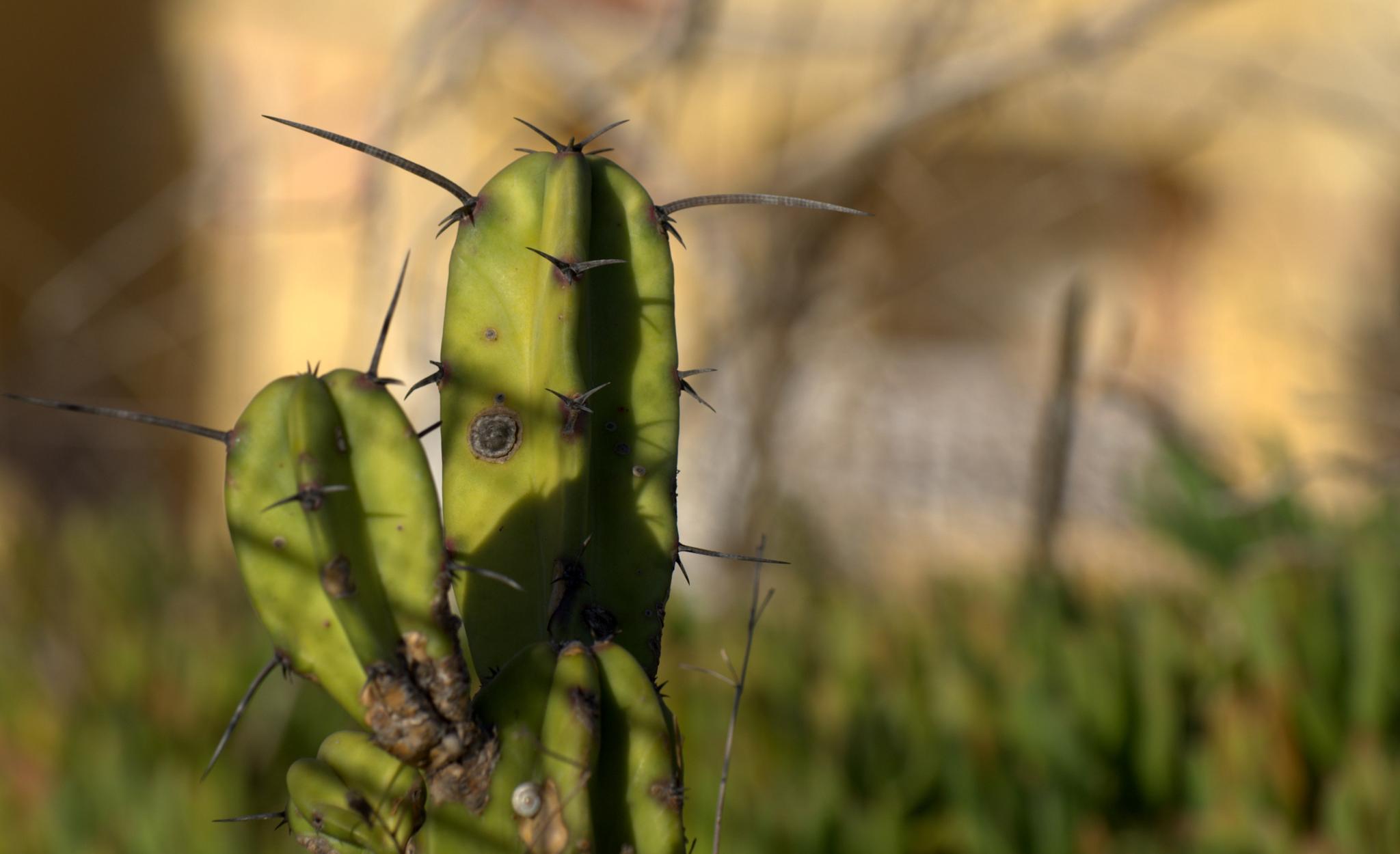 Cactus by Jozsef Keszan