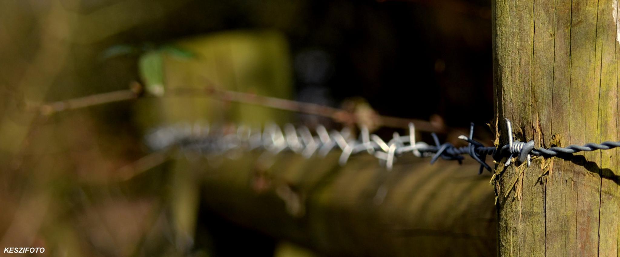Barbed wire by Jozsef Keszan