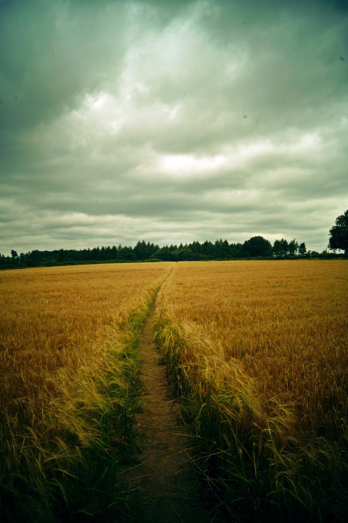 footpath by imurfin
