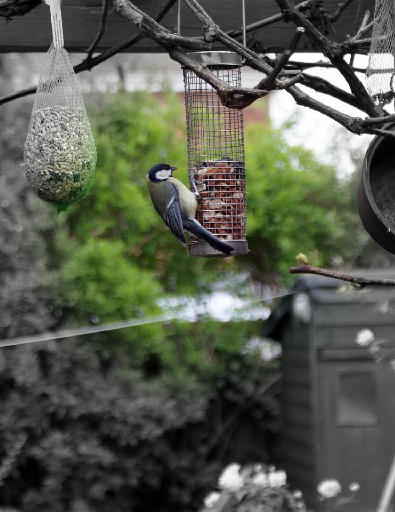 Feeding time by imurfin