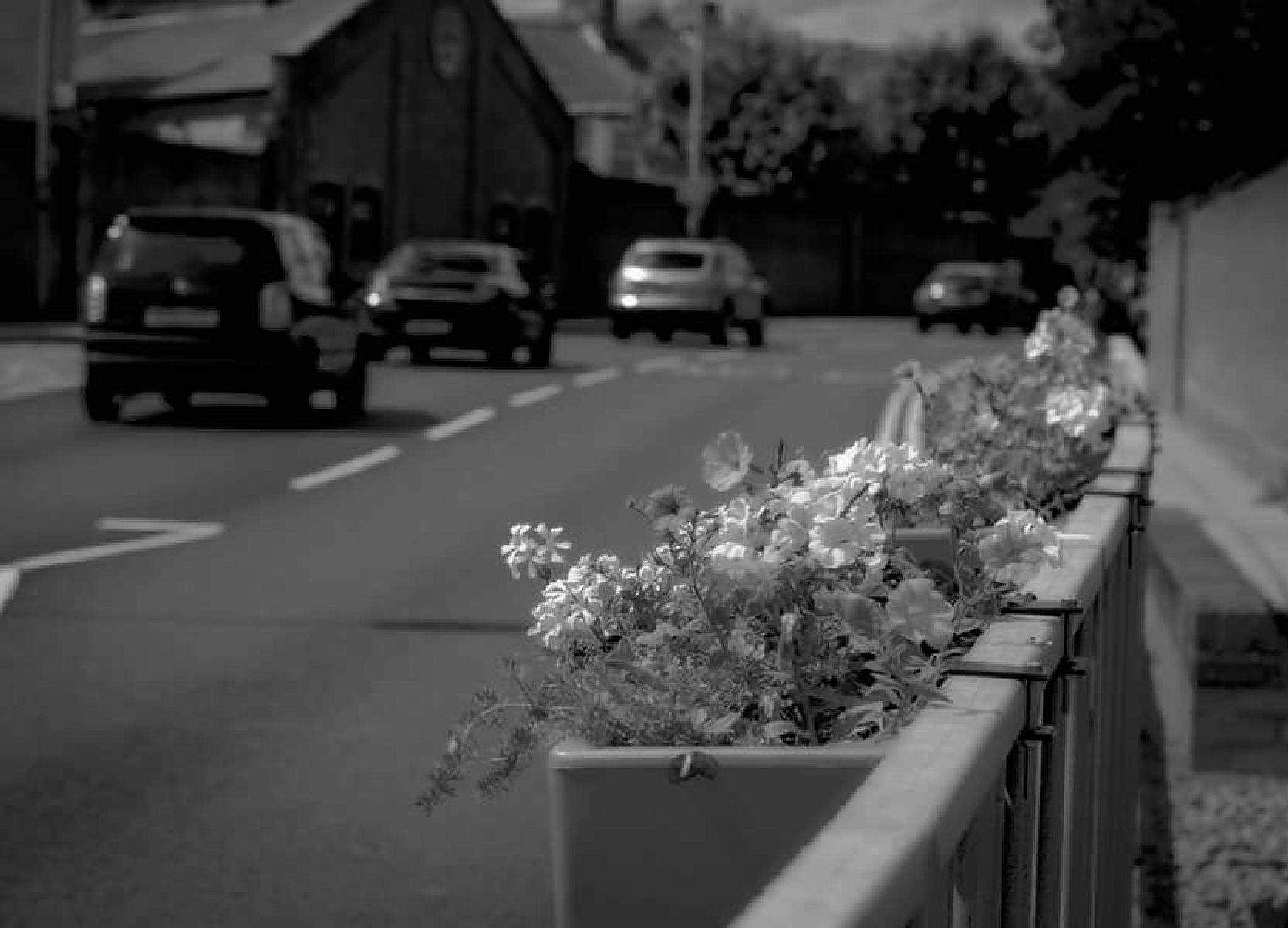 Photo in Black and White #traffic #road #flowers