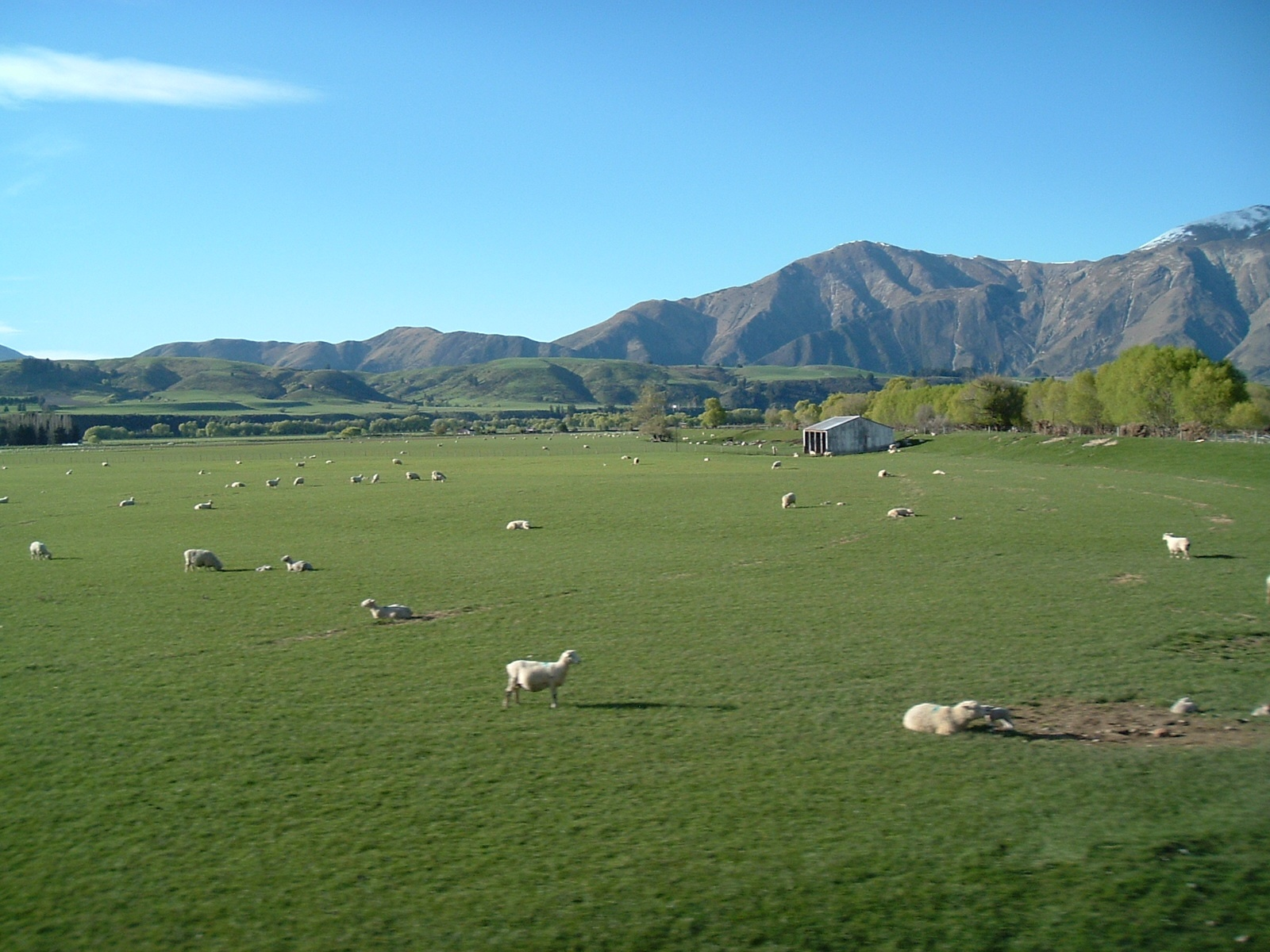 Sheep station outside Queenstown - N.Z. by maria.telegdy