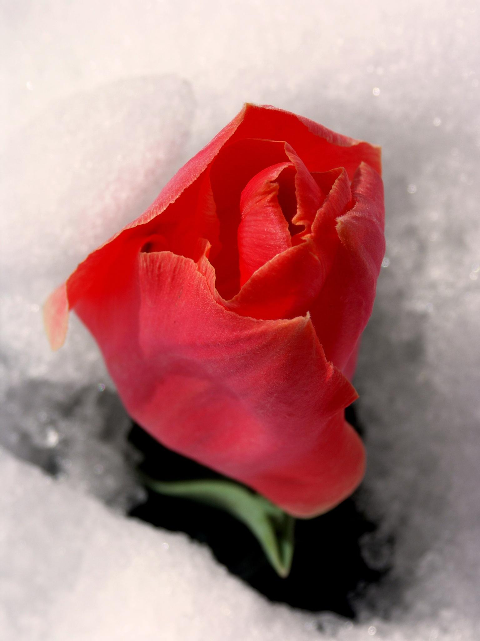 Under the snow by maria.telegdy