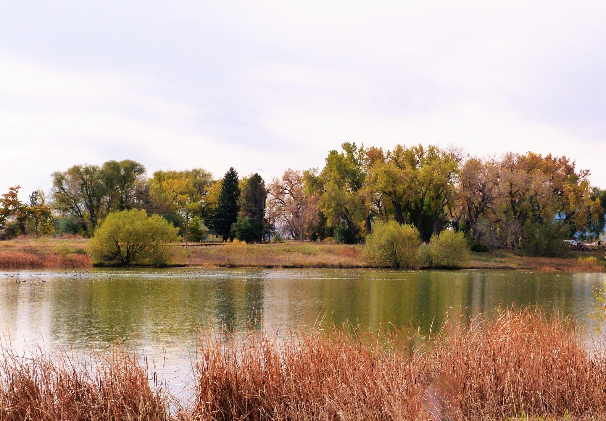 Calm river by maria.telegdy