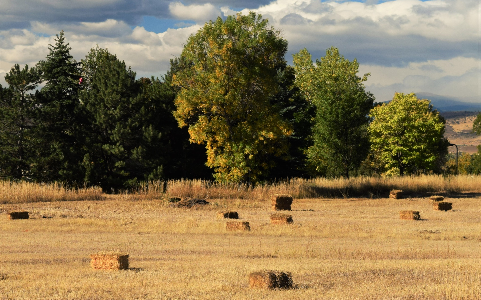 Drying hay bales by maria.telegdy