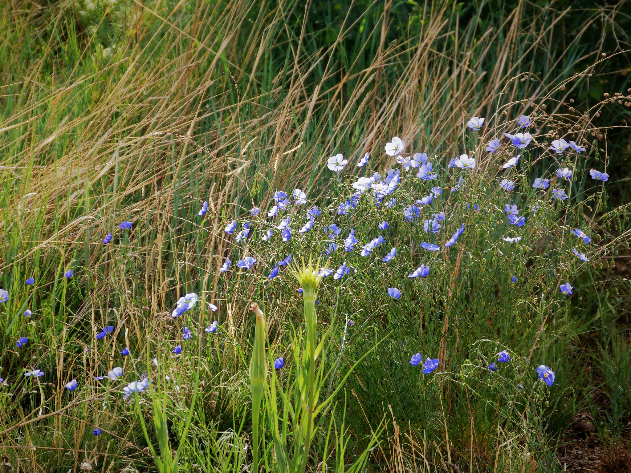Wildflowers 2 by maria.telegdy