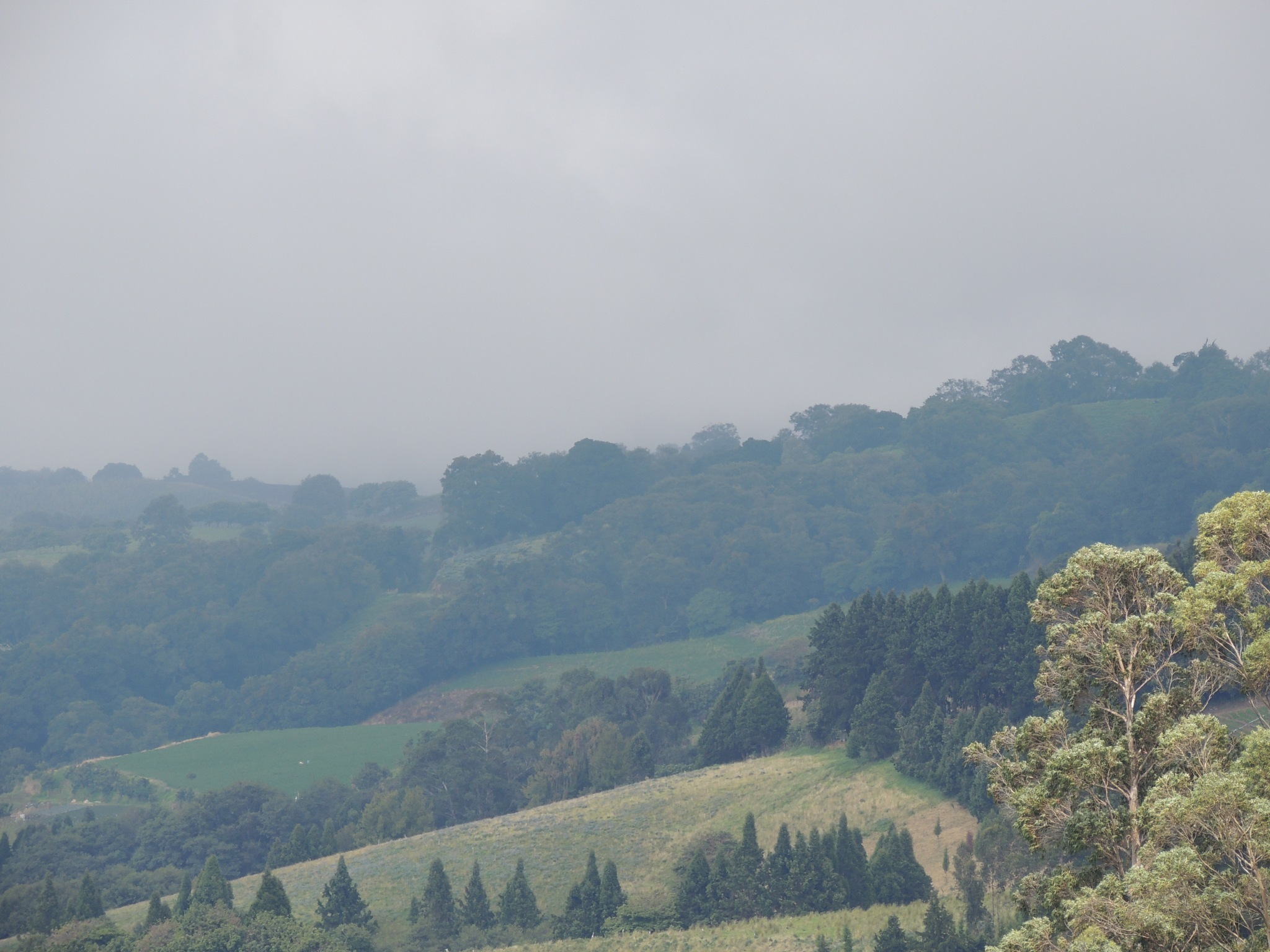 Hazy outlook - Vegetation of Costa Rica by maria.telegdy