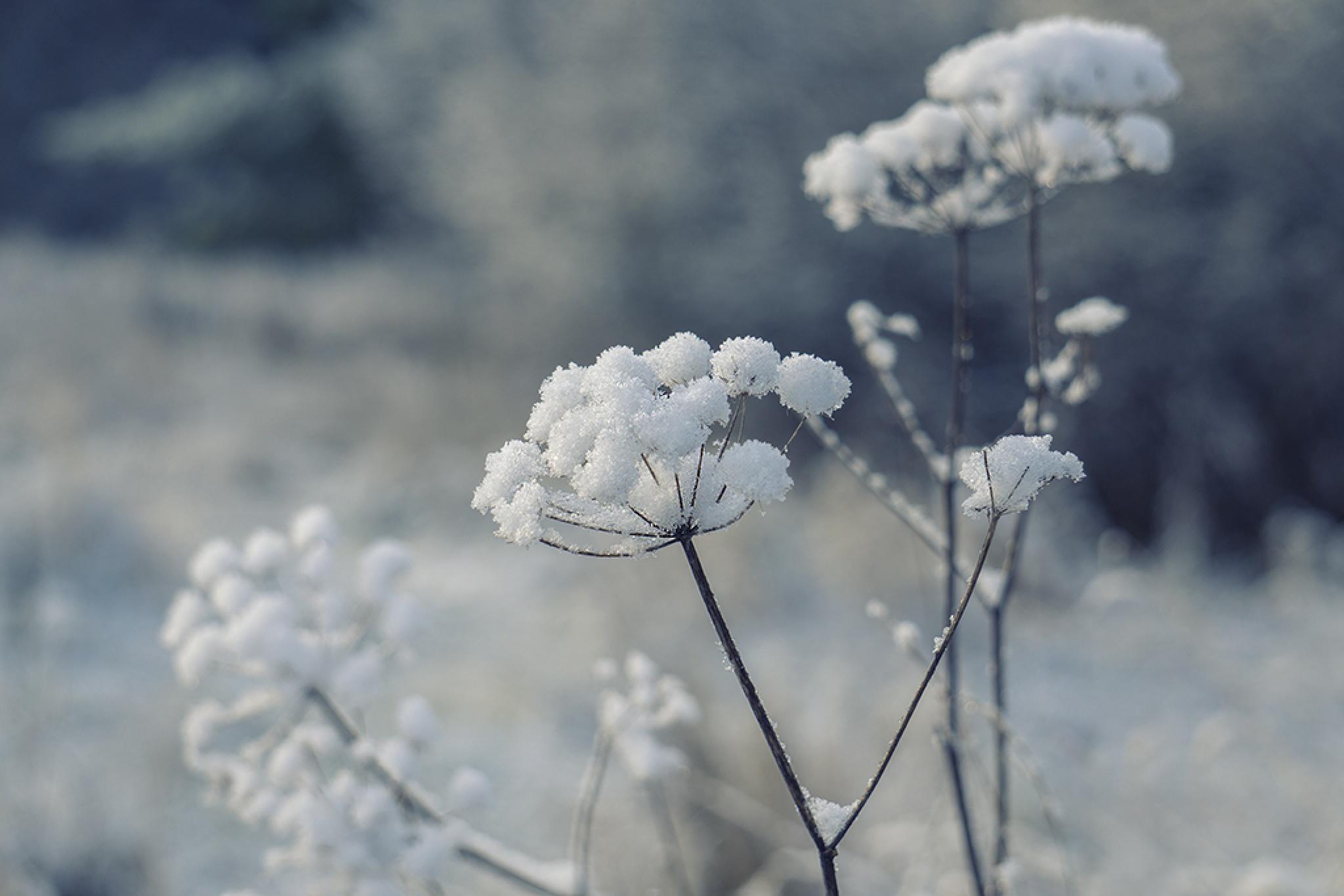 Frozen by MargaretaG